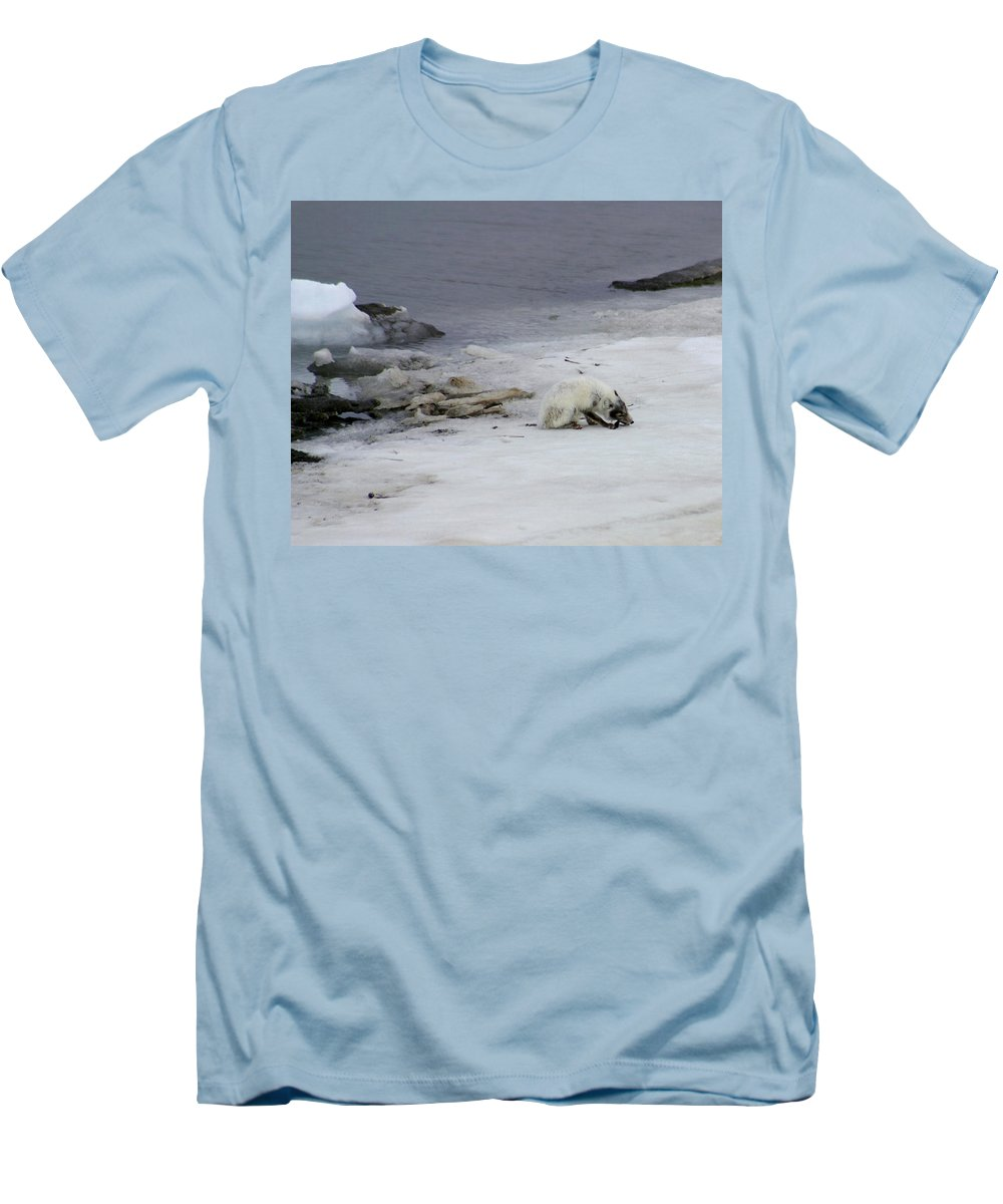 Arctic Fox Men's T-Shirt (Athletic Fit) featuring the photograph Arctic Fox Eating by Anthony Jones
