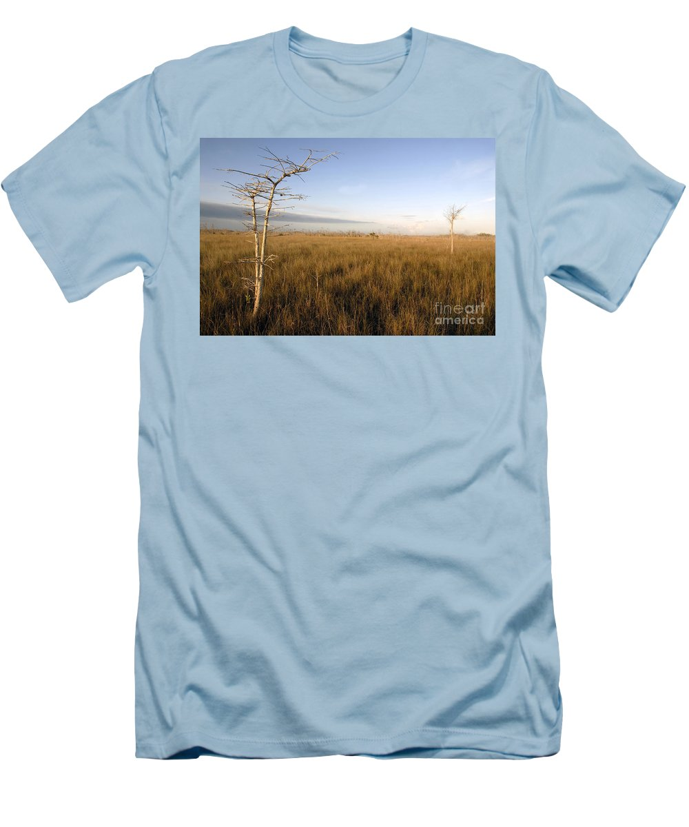 Bald Cypress Men's T-Shirt (Athletic Fit) featuring the photograph Big Cypress by David Lee Thompson