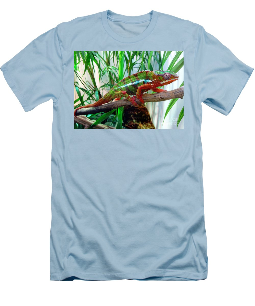 Chameleon Men's T-Shirt (Athletic Fit) featuring the photograph Colorful Chameleon by Nancy Mueller