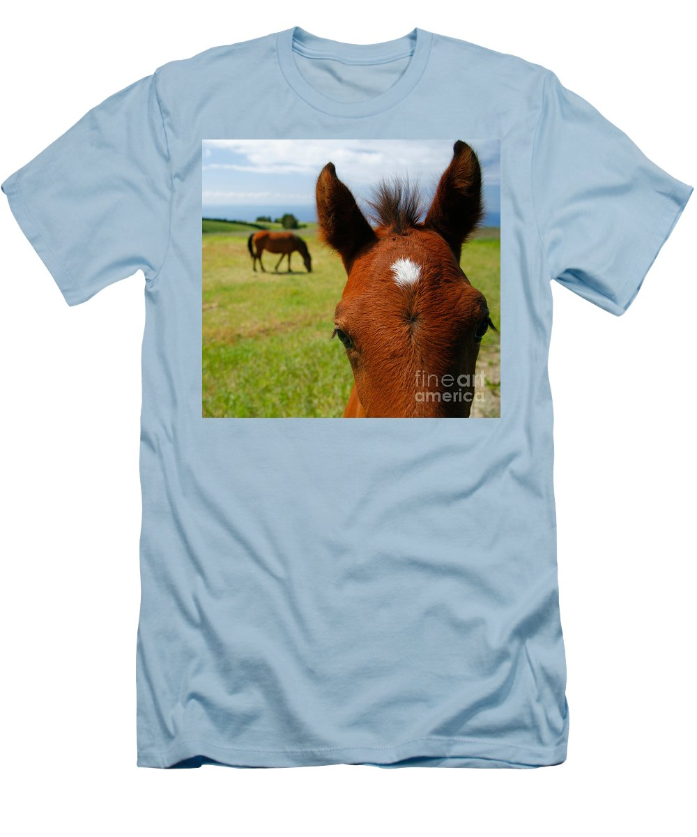 Farm Men's T-Shirt (Athletic Fit) featuring the photograph Curious Colt by Gaspar Avila