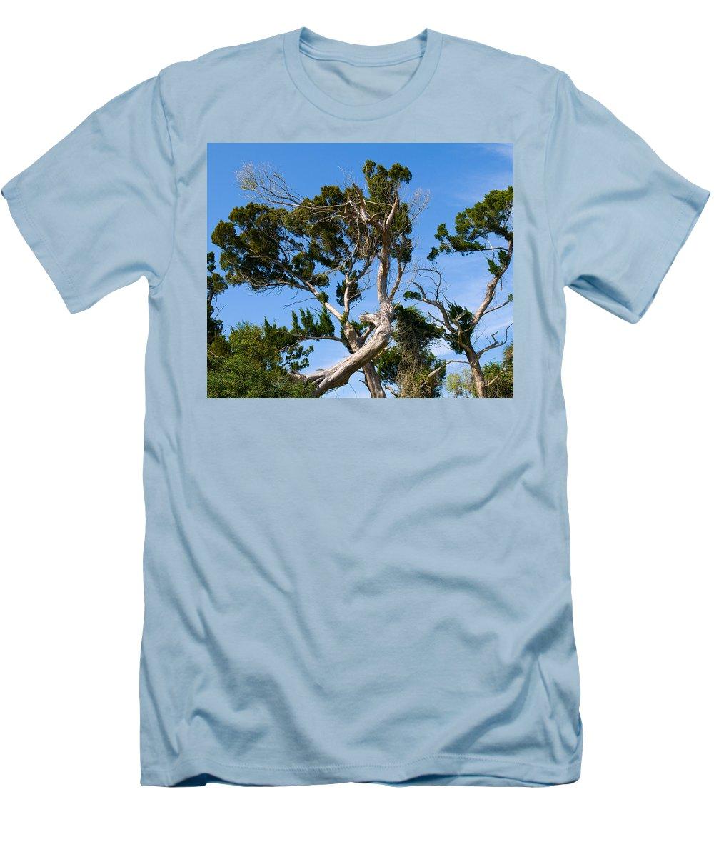 Cedar; Cedars; Tree; Florida; Timucuan; Indian; Mound; Shell; Midden; Oak; Hill; Flora; Branch; Weat Men's T-Shirt (Athletic Fit) featuring the photograph Florida Cedar Tree by Allan Hughes
