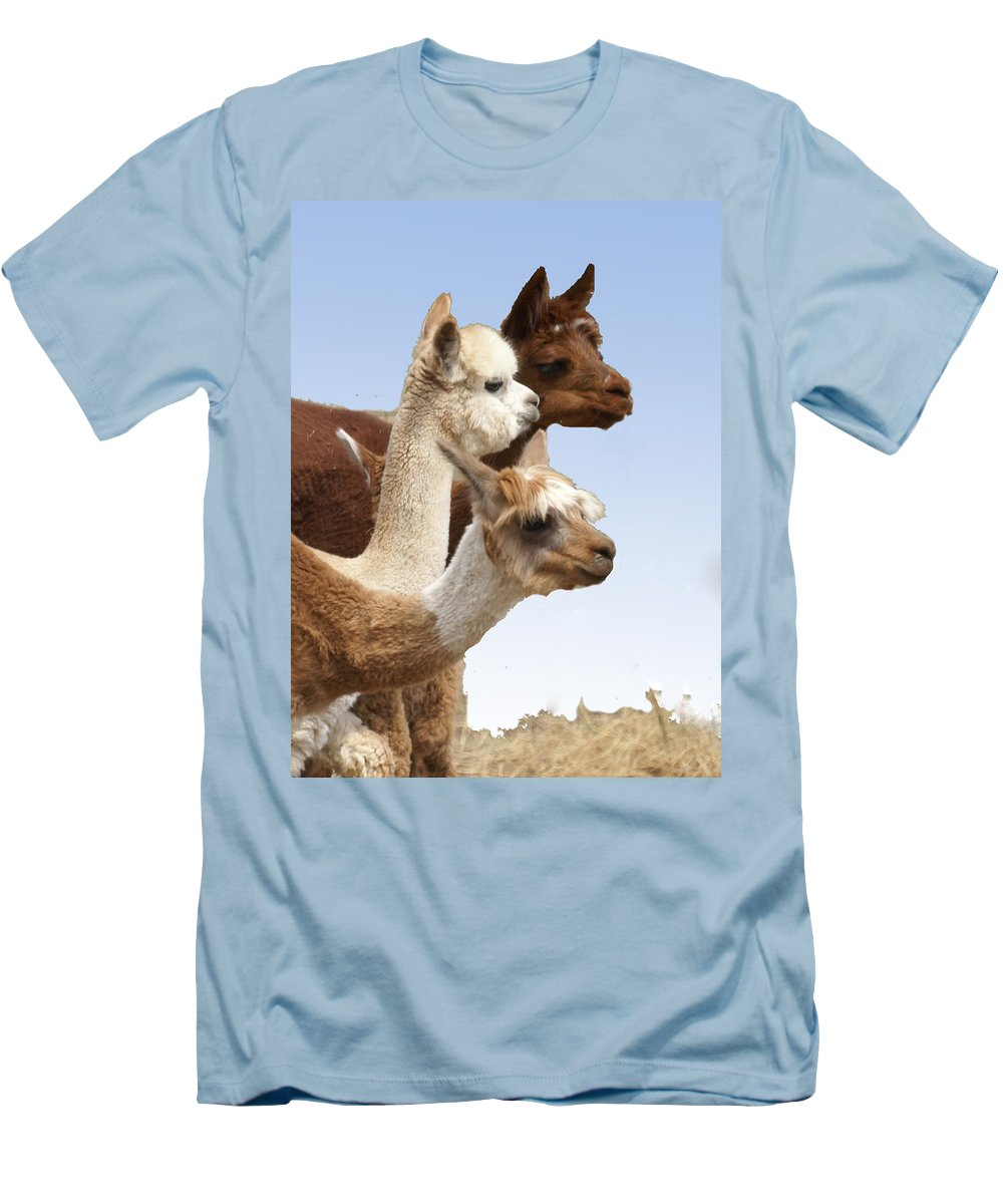 Llama Men's T-Shirt (Athletic Fit) featuring the photograph Llama's Three by Heather Coen
