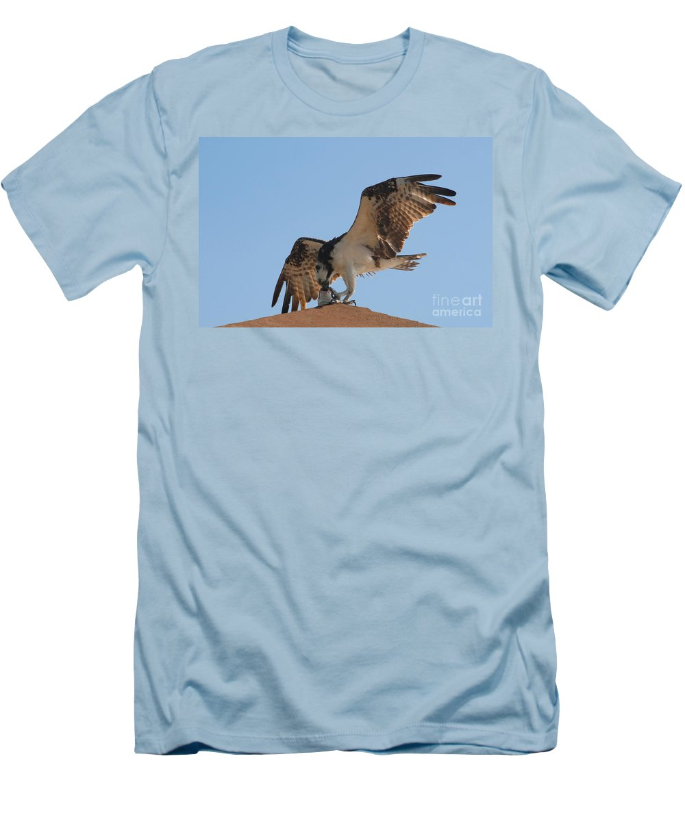 Osprey Men's T-Shirt (Athletic Fit) featuring the photograph Osprey by David Lee Thompson