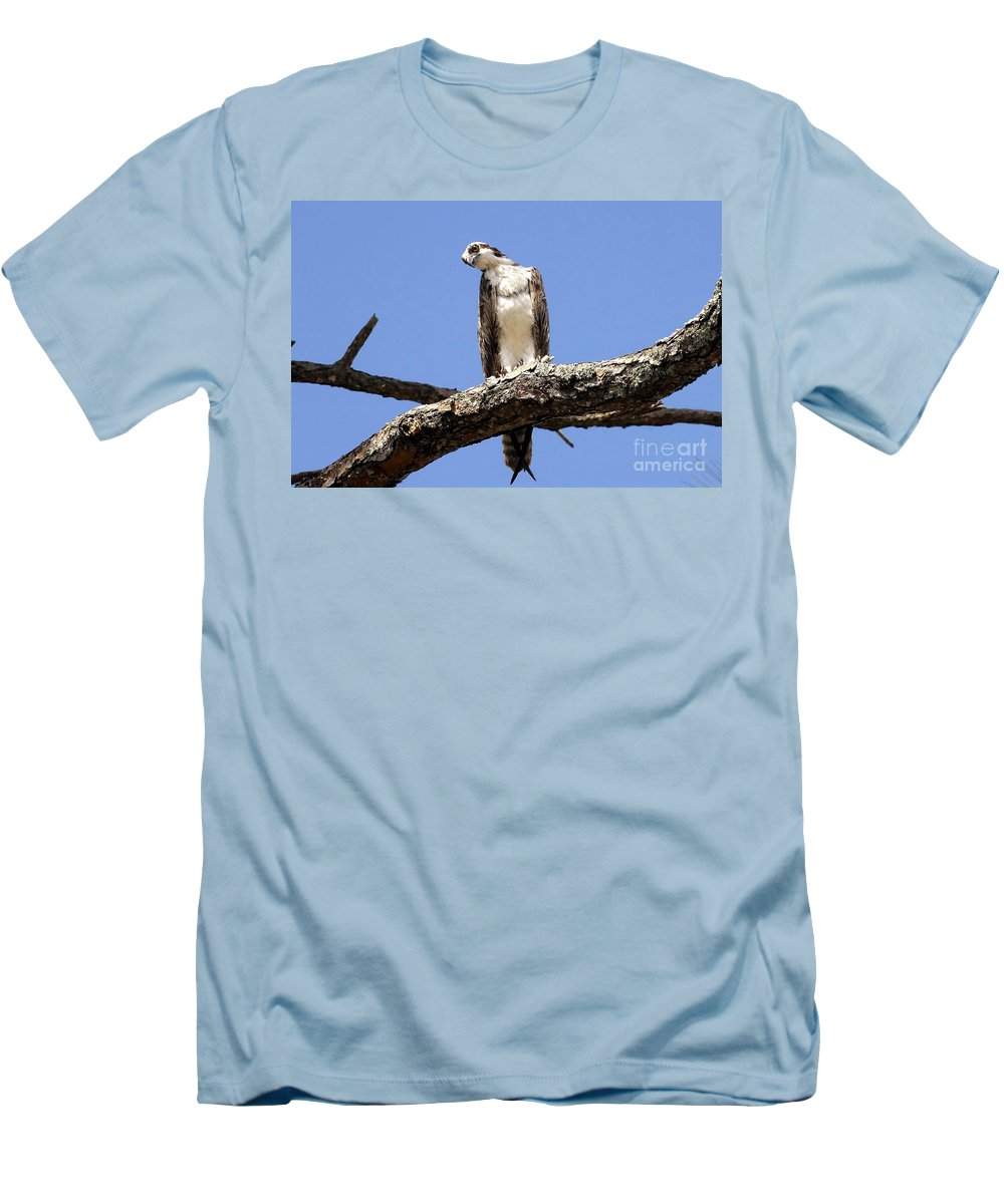 Osprey Men's T-Shirt (Athletic Fit) featuring the photograph Osprey In The Trees by David Lee Thompson