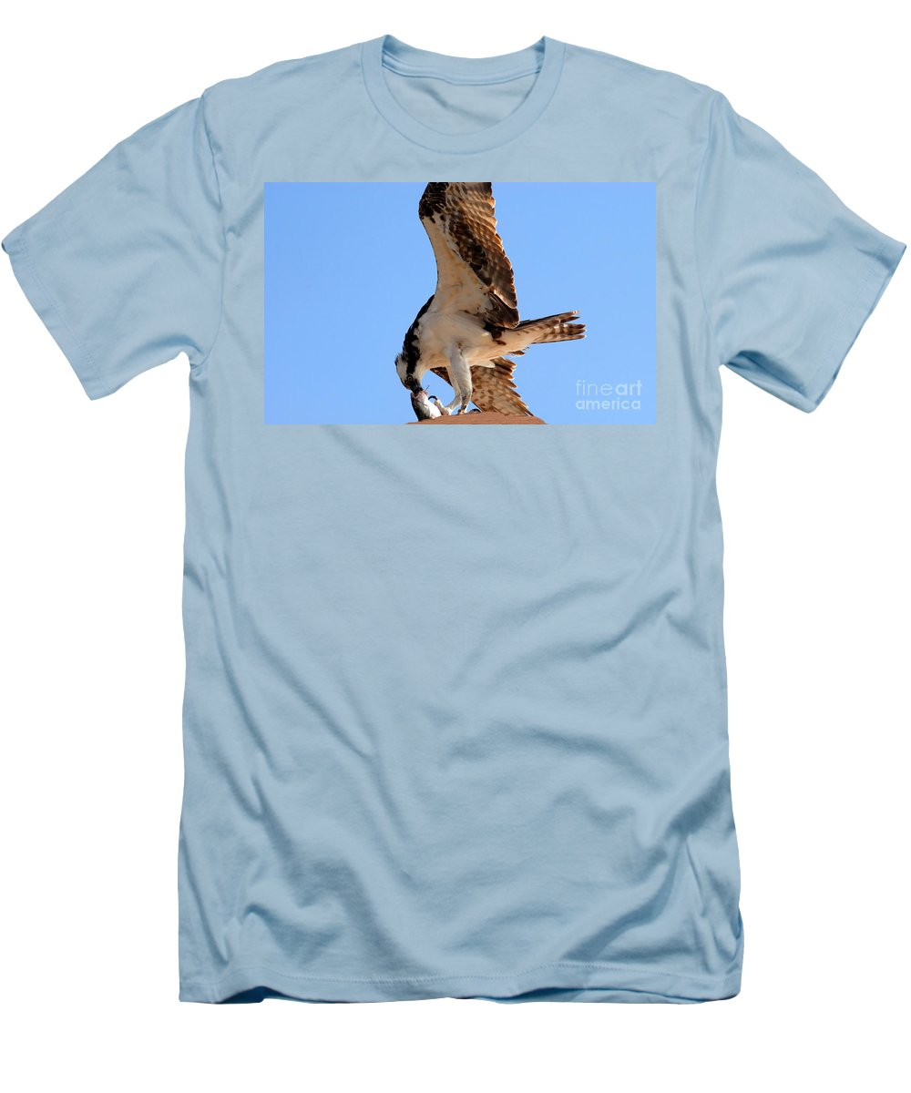 Osprey Men's T-Shirt (Athletic Fit) featuring the photograph Osprey's Catch by David Lee Thompson