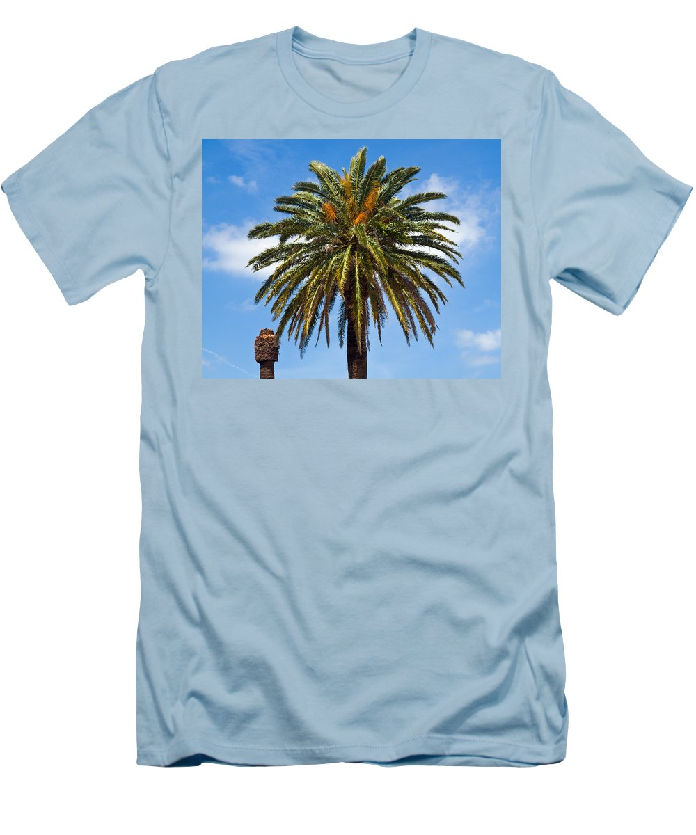 Palm; Tree; Royal; Queen; Scepter; Florida; Frond; Saw; Palmetto; Branch; Wave; Wind; Breeze; Scrub; Men's T-Shirt (Athletic Fit) featuring the photograph Royal Palm In Florida by Allan Hughes