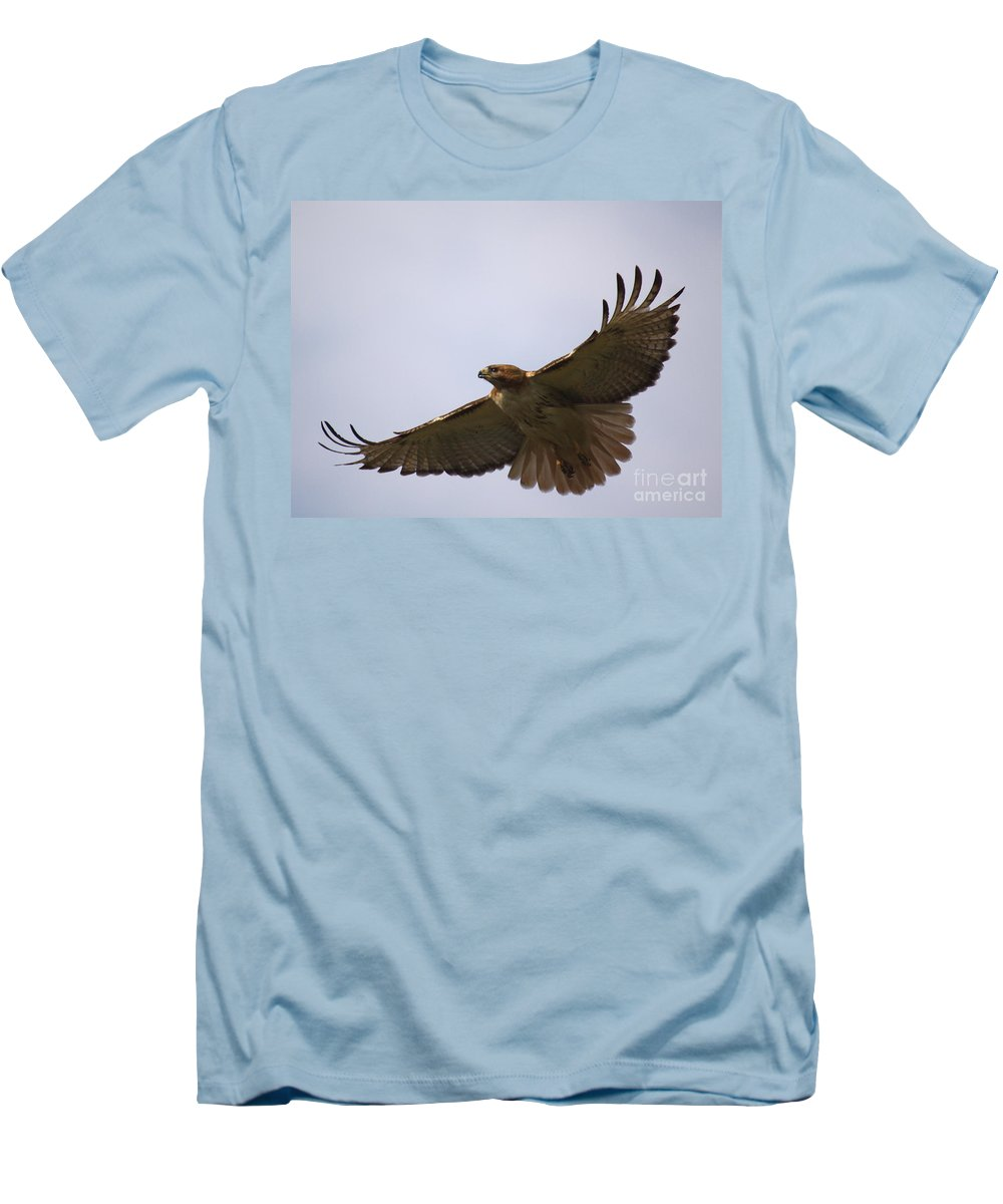 Hawk Men's T-Shirt (Athletic Fit) featuring the photograph Taking Survey by Robert Pearson