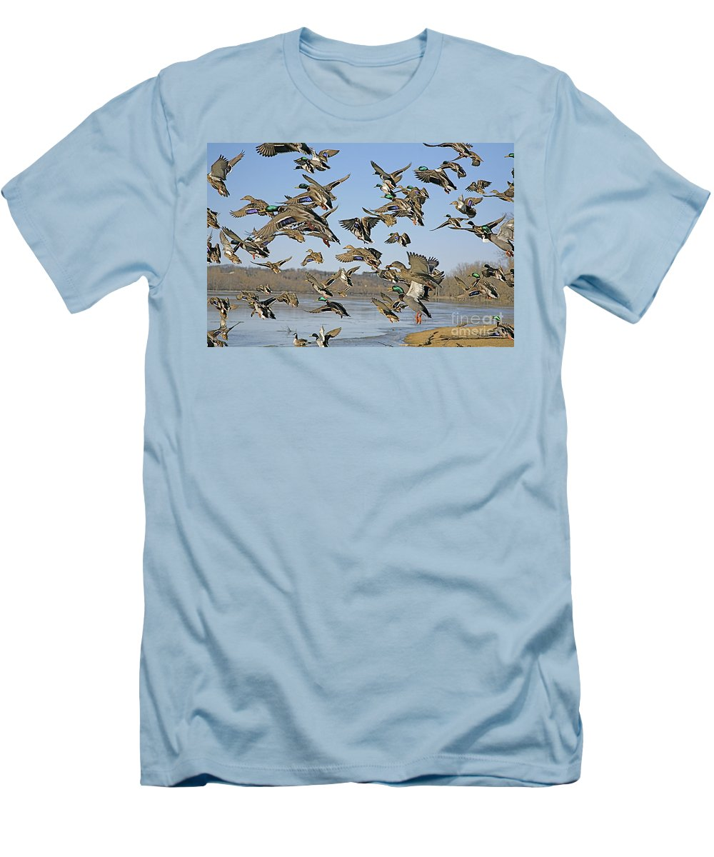 Ducks Men's T-Shirt (Athletic Fit) featuring the photograph The Mad Rush by Robert Pearson