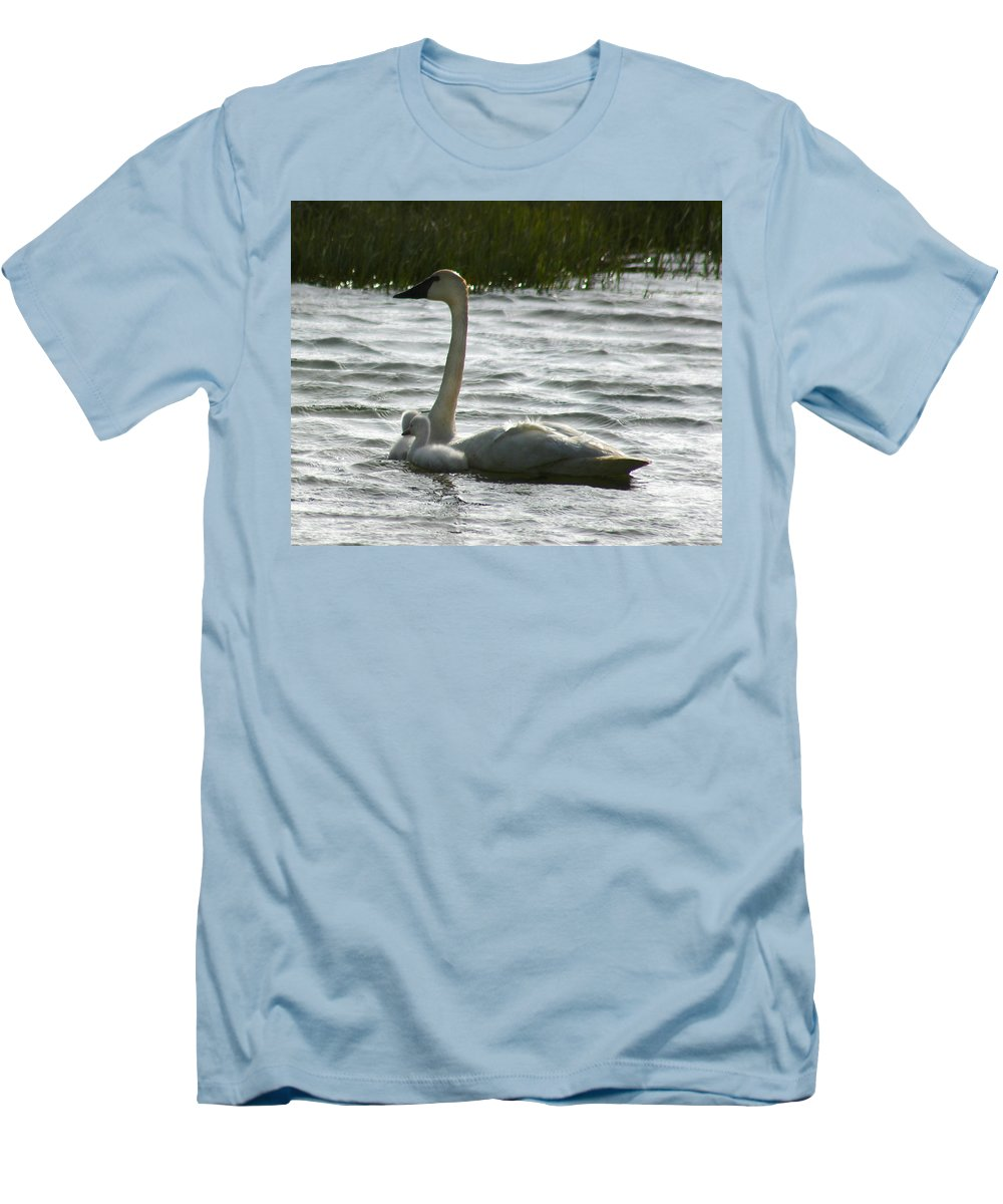 Swans Men's T-Shirt (Athletic Fit) featuring the photograph Tundra Swan And Signets by Anthony Jones