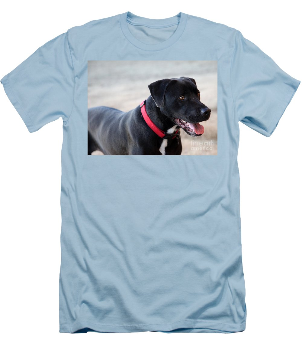Dogs Men's T-Shirt (Athletic Fit) featuring the photograph Yes I Want To Play by Amanda Barcon