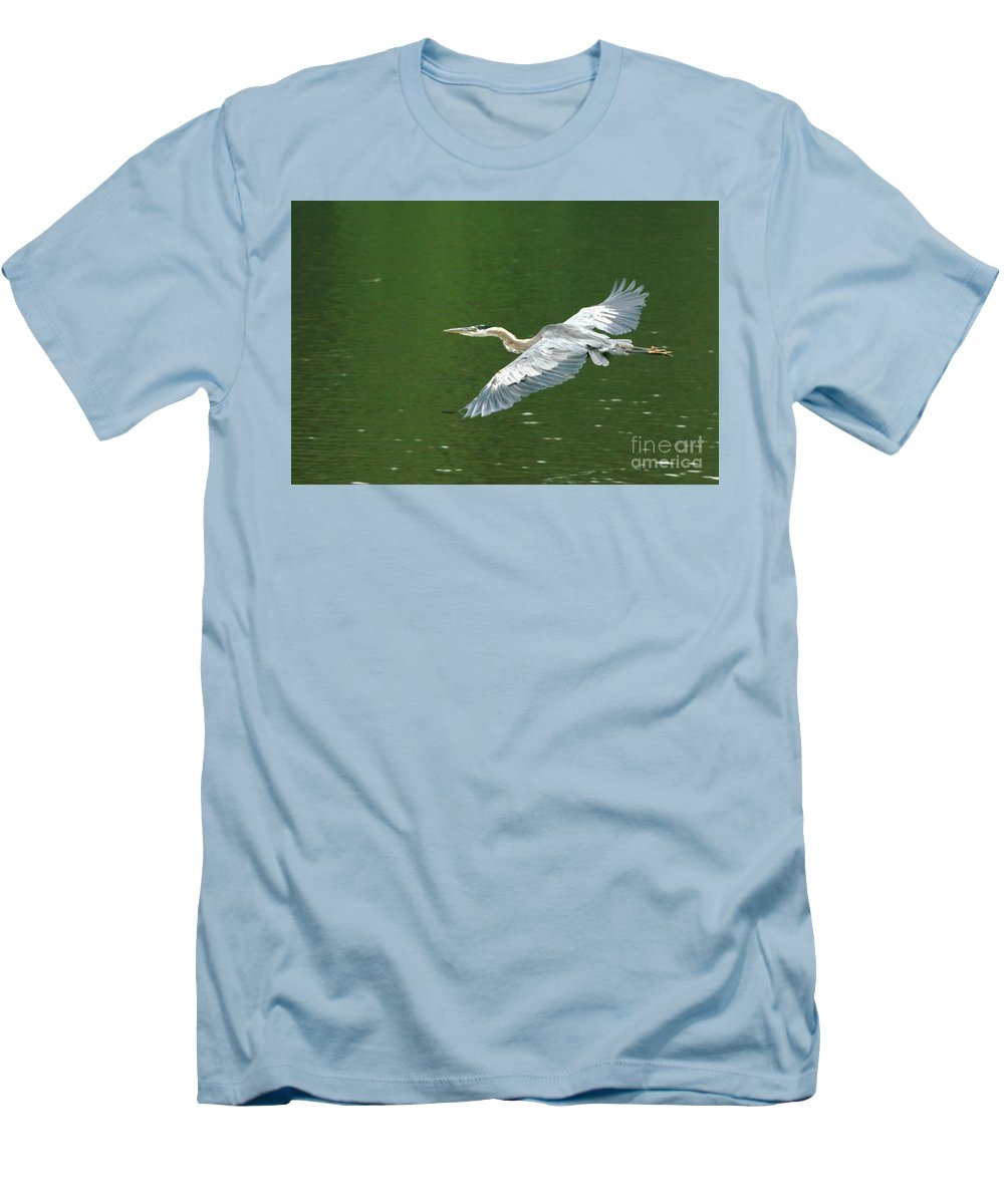 Landscape Nature Wildlife Bird Crane Heron Green Flight Ohio Water Men's T-Shirt (Athletic Fit) featuring the photograph Young Great Blue Heron Taking Flight by Dawn Downour