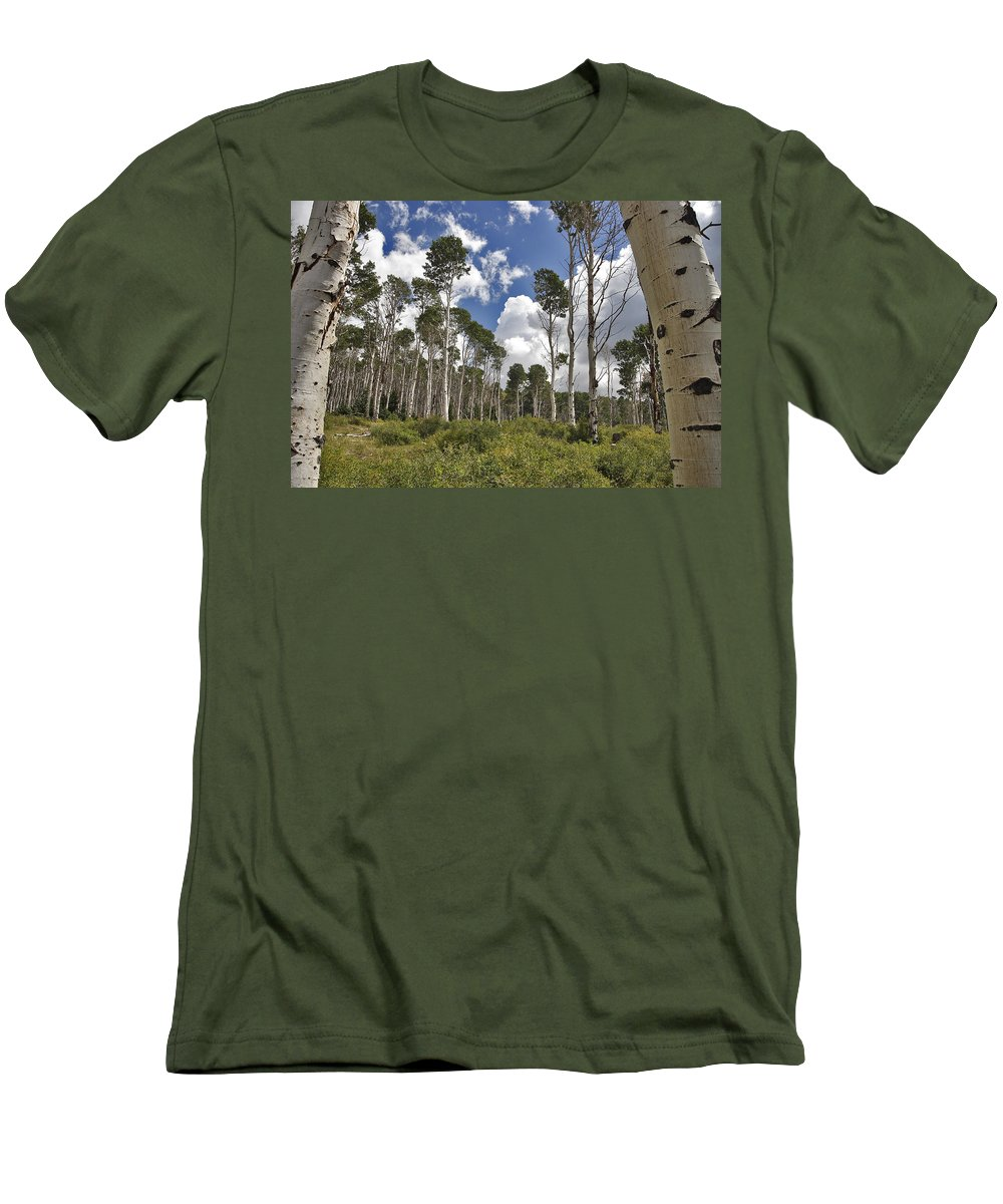 3scape Photos Men's T-Shirt (Athletic Fit) featuring the photograph Aspen Grove by Adam Romanowicz