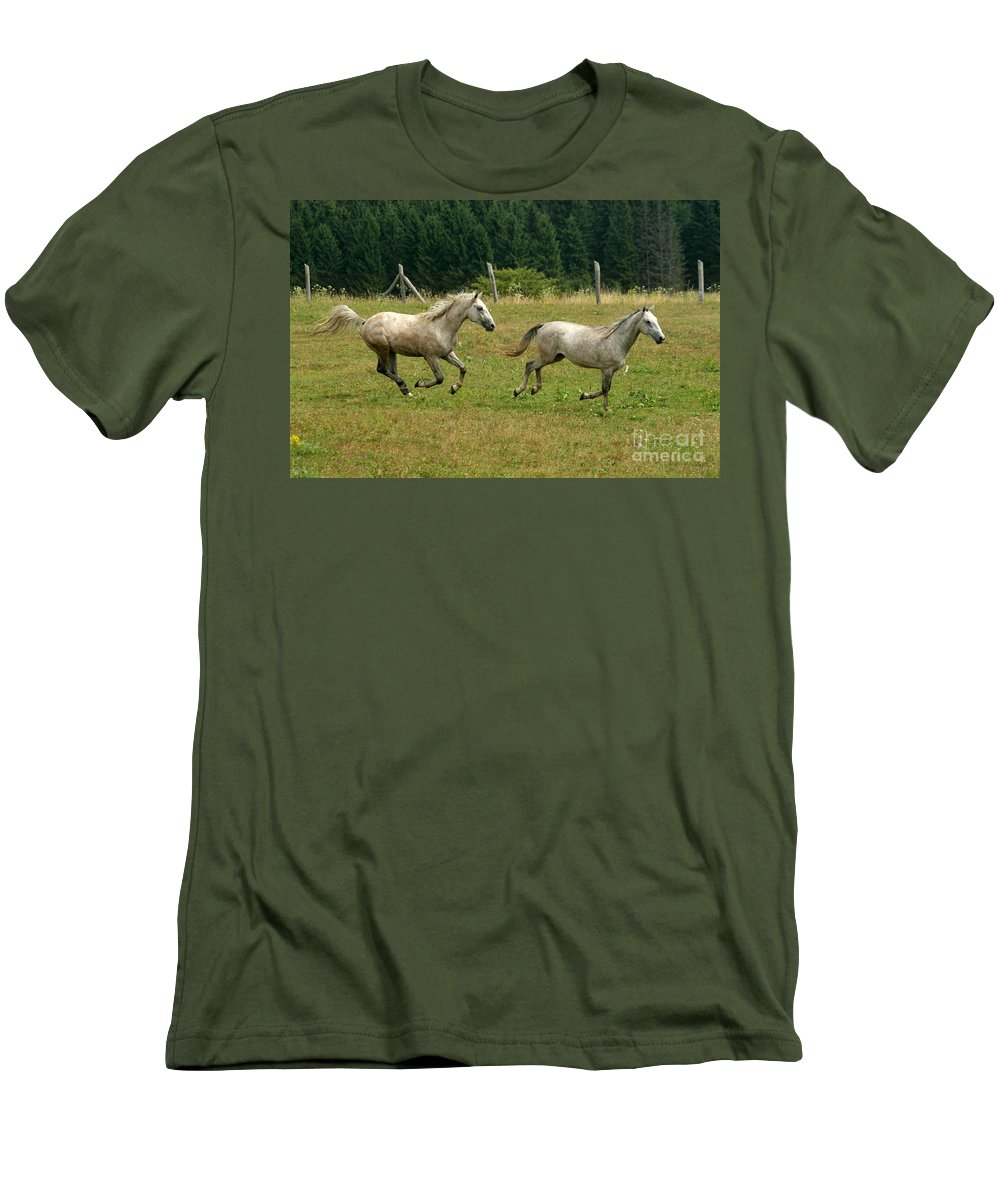 Grey Horse Men's T-Shirt (Athletic Fit) featuring the photograph Catch Me If You Can by Angel Ciesniarska