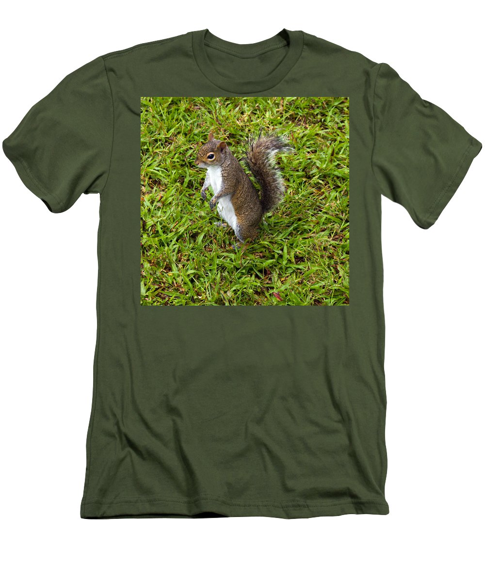 Squirrel; Eastern; Gray; Sciurus; Carolinensis; Swarm; Food; Florida; Eau; Gallie; Melbourne; Park; Men's T-Shirt (Athletic Fit) featuring the photograph Eastern Gray Squirrel by Allan Hughes