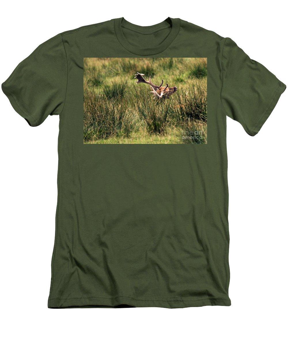 Fallow Deer Men's T-Shirt (Athletic Fit) featuring the photograph Siesta by Angel Ciesniarska