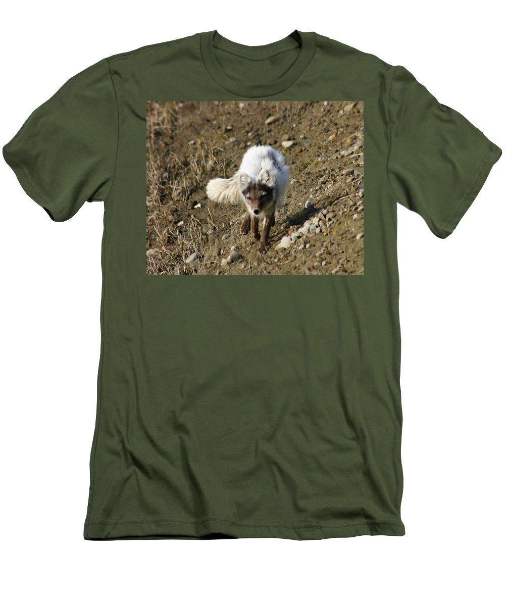 Arctic Fox Men's T-Shirt (Athletic Fit) featuring the photograph Arctic Fox by Anthony Jones