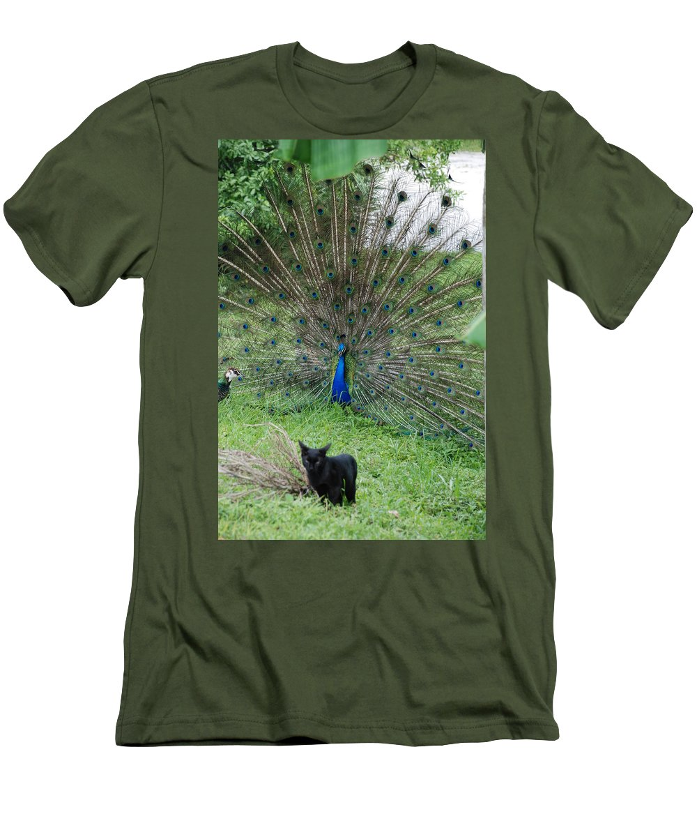 Animals Men's T-Shirt (Athletic Fit) featuring the photograph 2 Peacocks And A Black Pussy Cat by Rob Hans