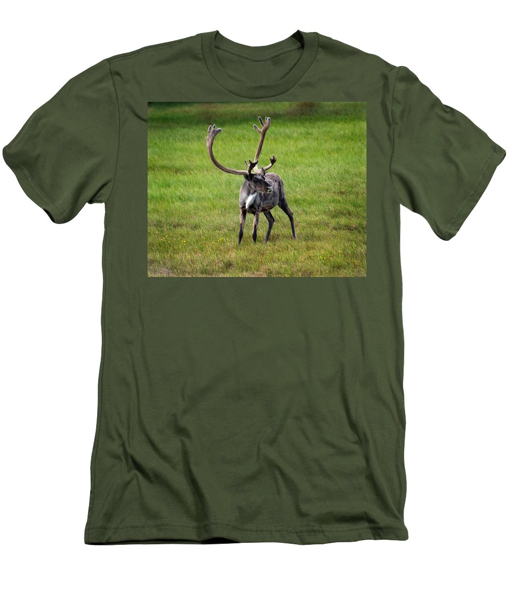 Caribou Men's T-Shirt (Athletic Fit) featuring the photograph Big Horn by Anthony Jones