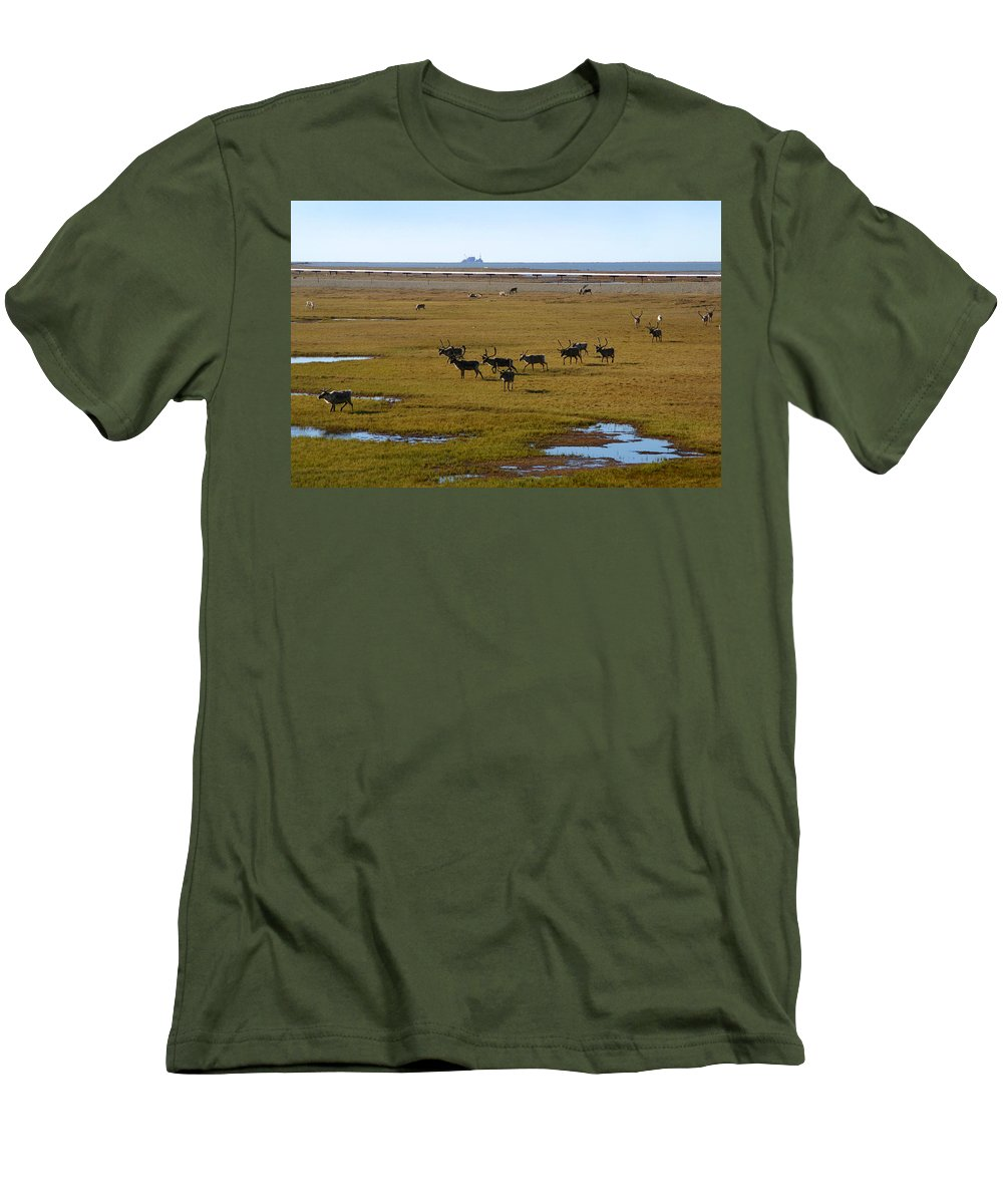 Caribou Men's T-Shirt (Athletic Fit) featuring the photograph Caribou Herd by Anthony Jones