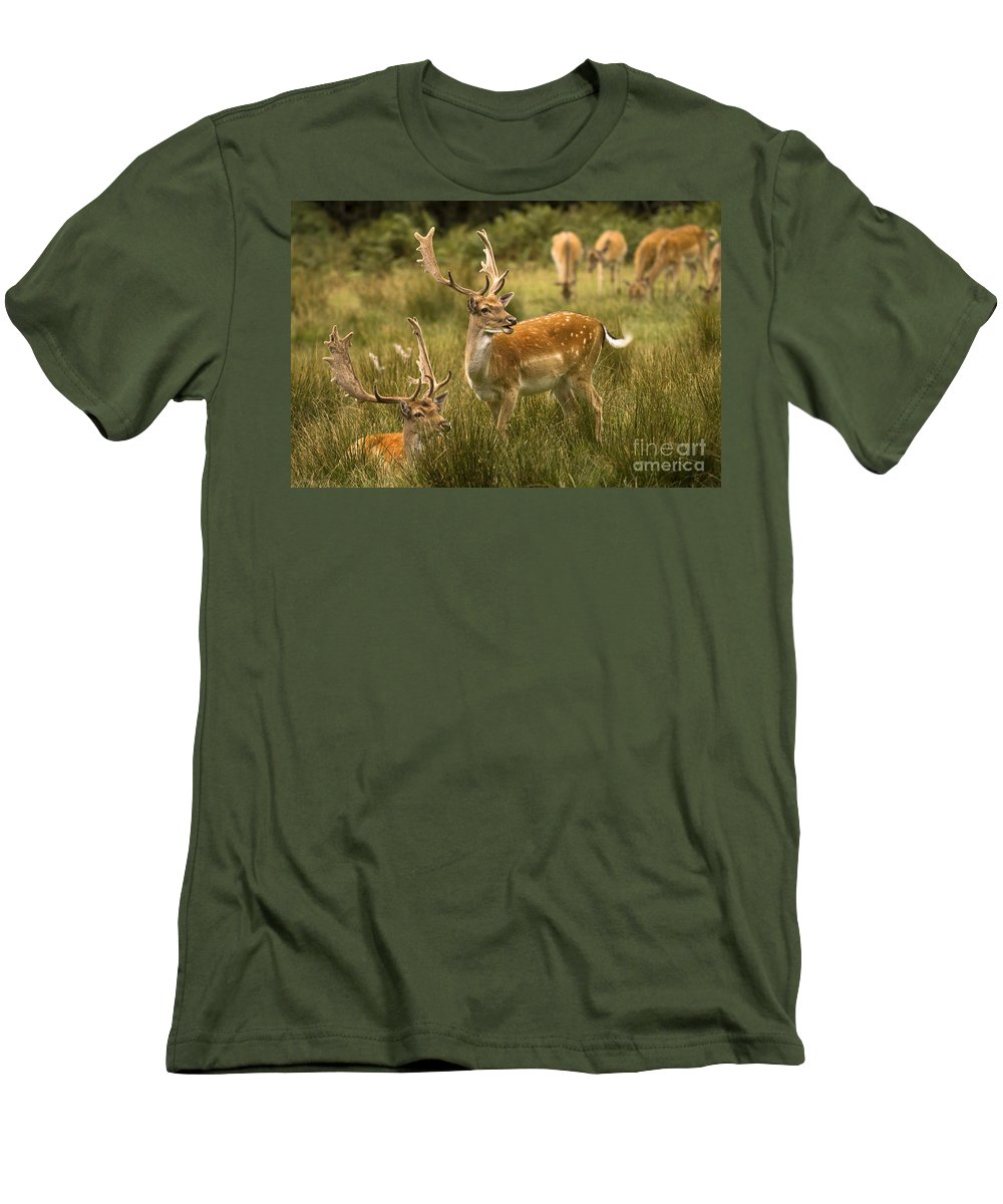 Fallow Deer Men's T-Shirt (Athletic Fit) featuring the photograph Fallow Deer by Angel Ciesniarska