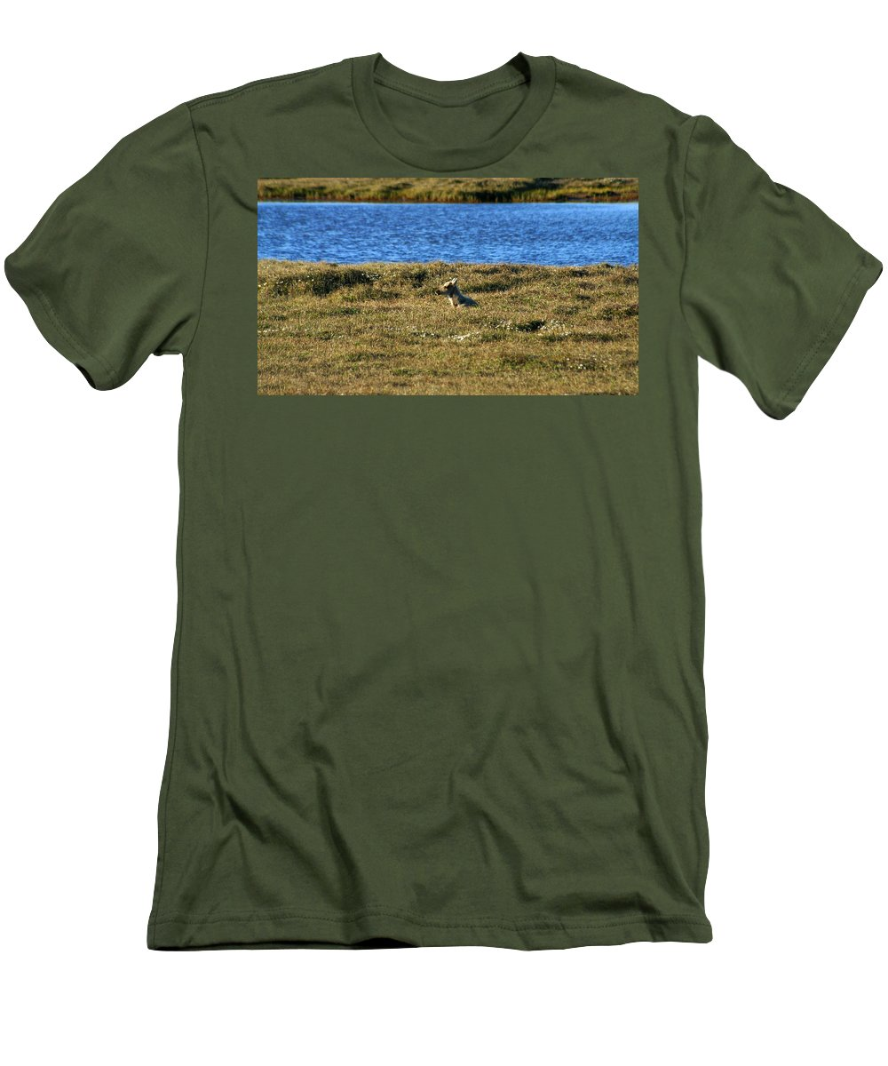 Caribou Men's T-Shirt (Athletic Fit) featuring the photograph Fawn Caribou by Anthony Jones