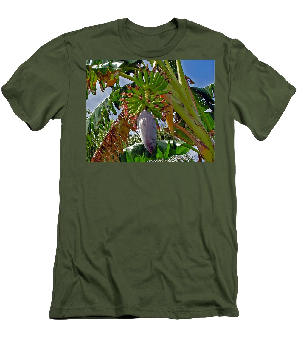 Banana; Bunch; Fruit; Flower; Tree; Stalk; Growing; Florida; Melbourne; Beach; Hand; Baby; Green; Le Men's T-Shirt (Athletic Fit) featuring the photograph Florida Banana Flower And Fruit by Allan Hughes