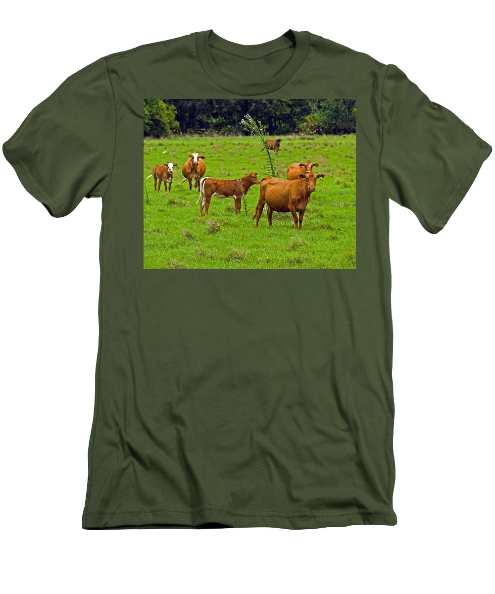 Black; Red; Angus; Brahman; Simmental; Red Poll; Hereford; Cattle; Braford; Cow; Cows; Bull; Milk; B Men's T-Shirt (Athletic Fit) featuring the photograph Hybrid Cattle On The Deseret Ranch In East Central Florida by Allan Hughes