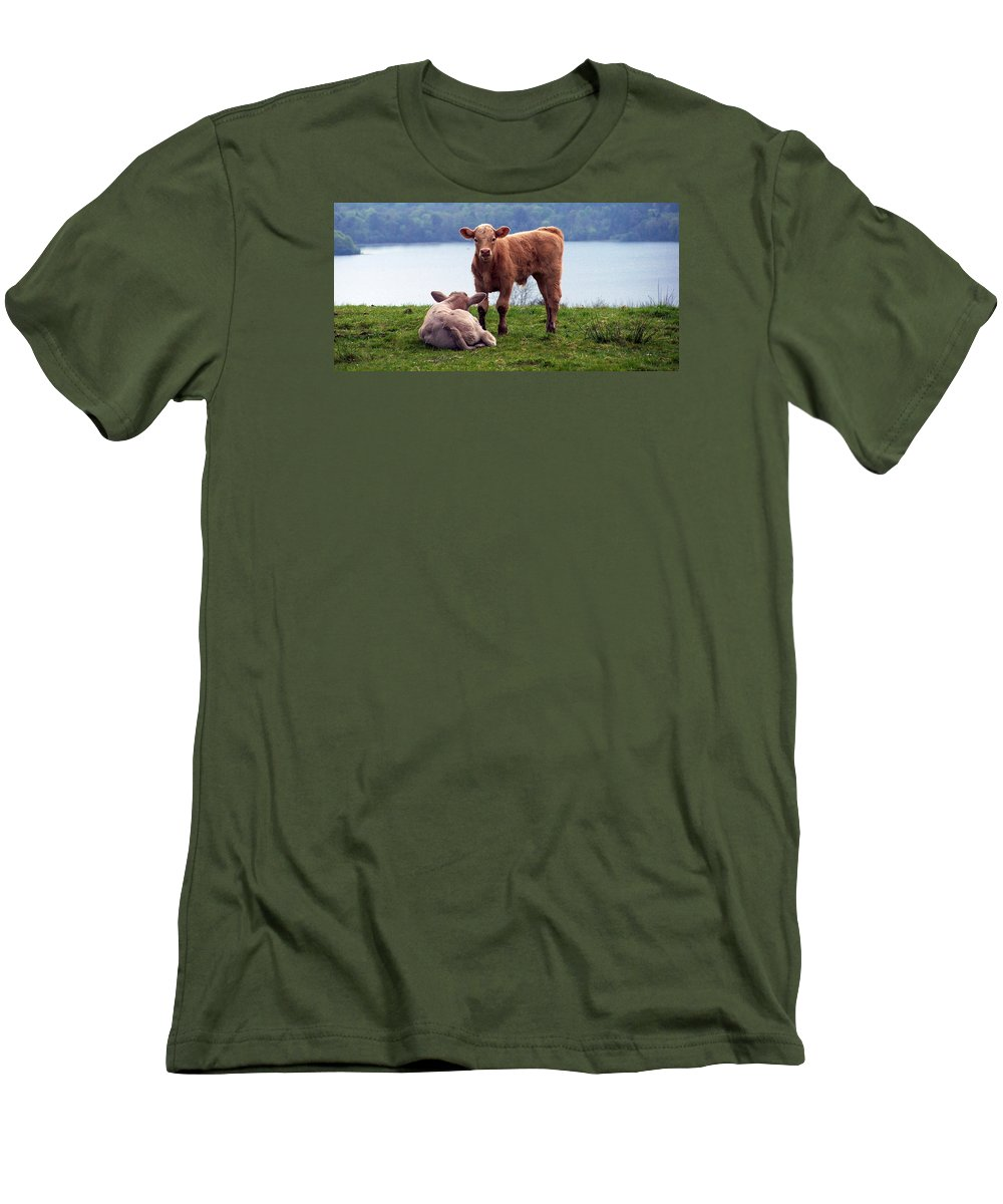 Ireland Men's T-Shirt (Athletic Fit) featuring the photograph Irish Calves At Lough Eske by Teresa Mucha