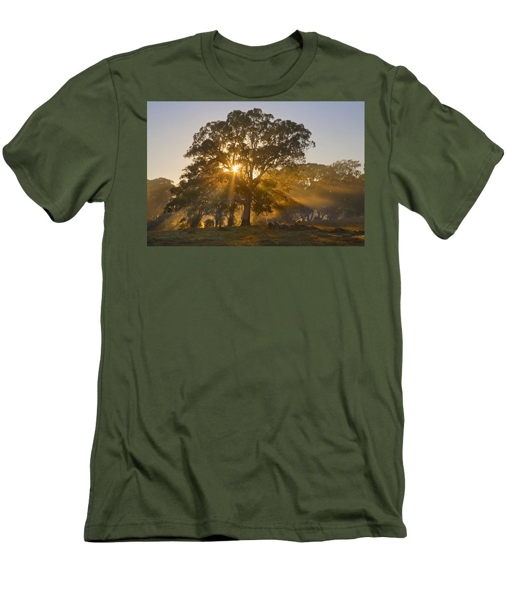 Tree Men's T-Shirt (Athletic Fit) featuring the photograph Let There Be Light by Mike Dawson