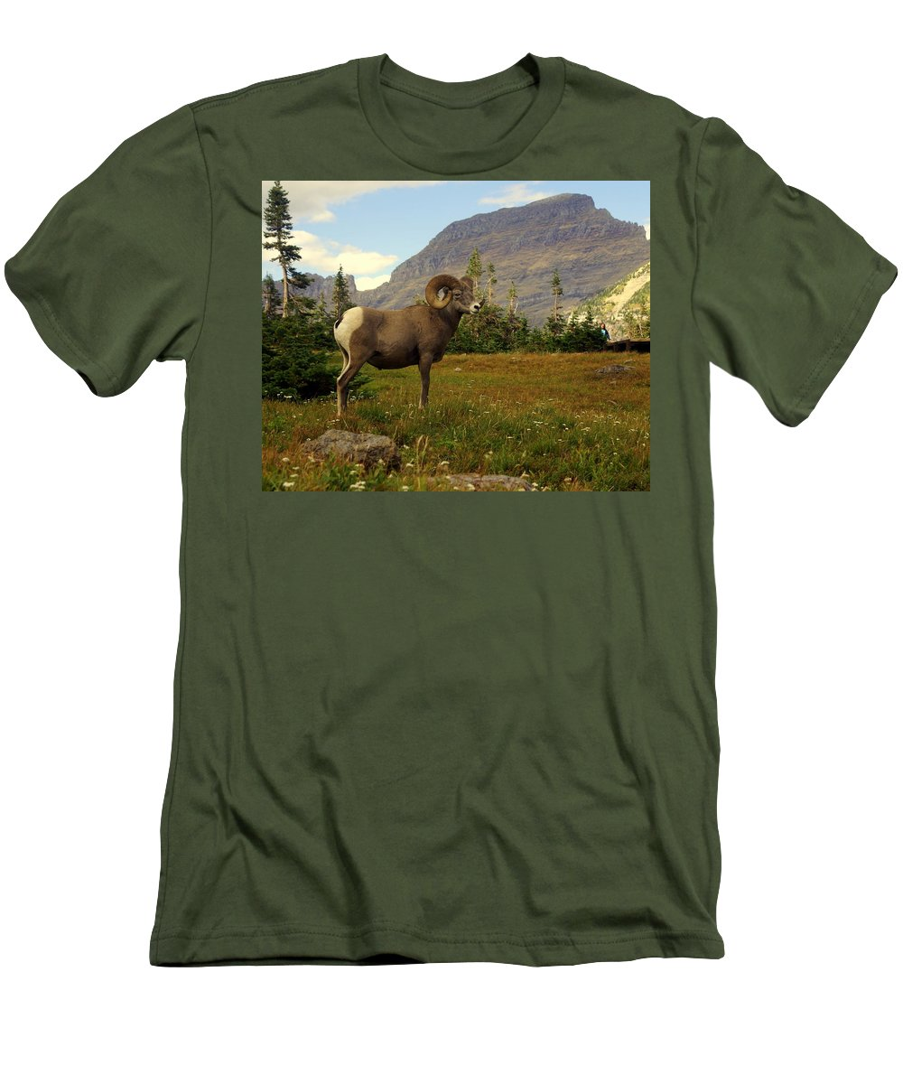 Big Horn Sheep Men's T-Shirt (Athletic Fit) featuring the photograph Master Of His Domain by Marty Koch