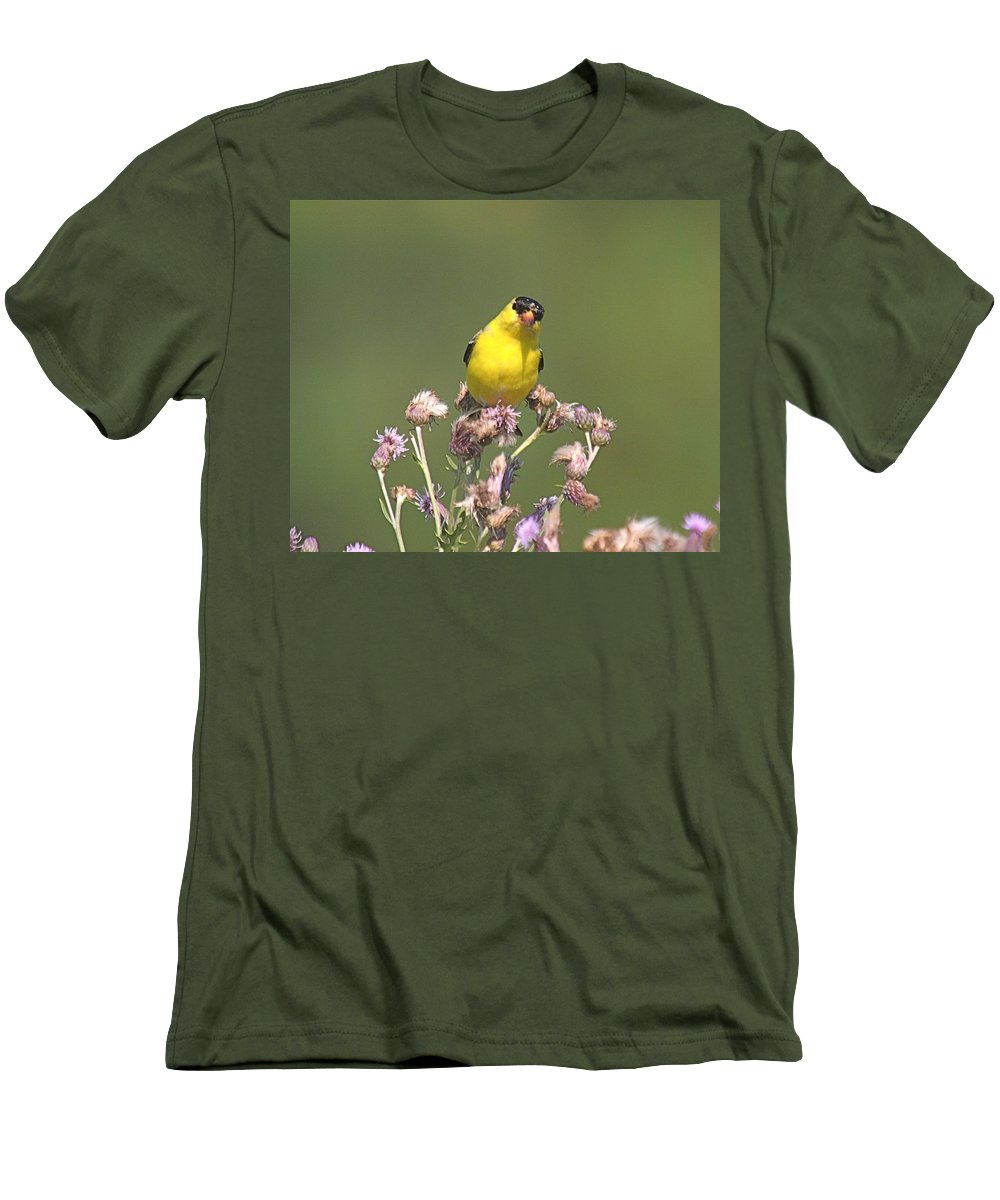 Bird Men's T-Shirt (Athletic Fit) featuring the photograph Mr Gold Finch by Robert Pearson