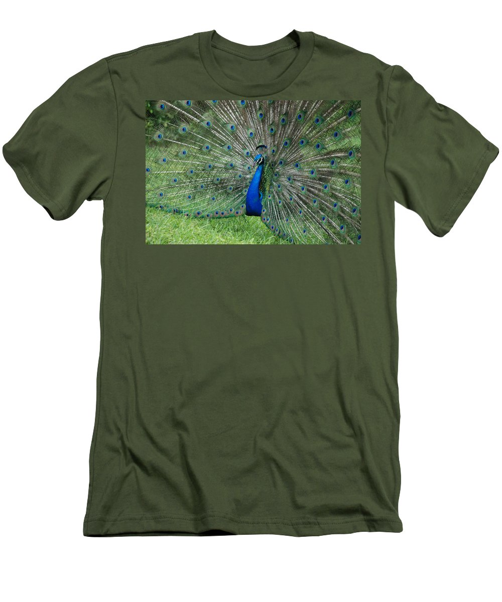 Peacock Men's T-Shirt (Athletic Fit) featuring the photograph Peacocks Glory by Rob Hans