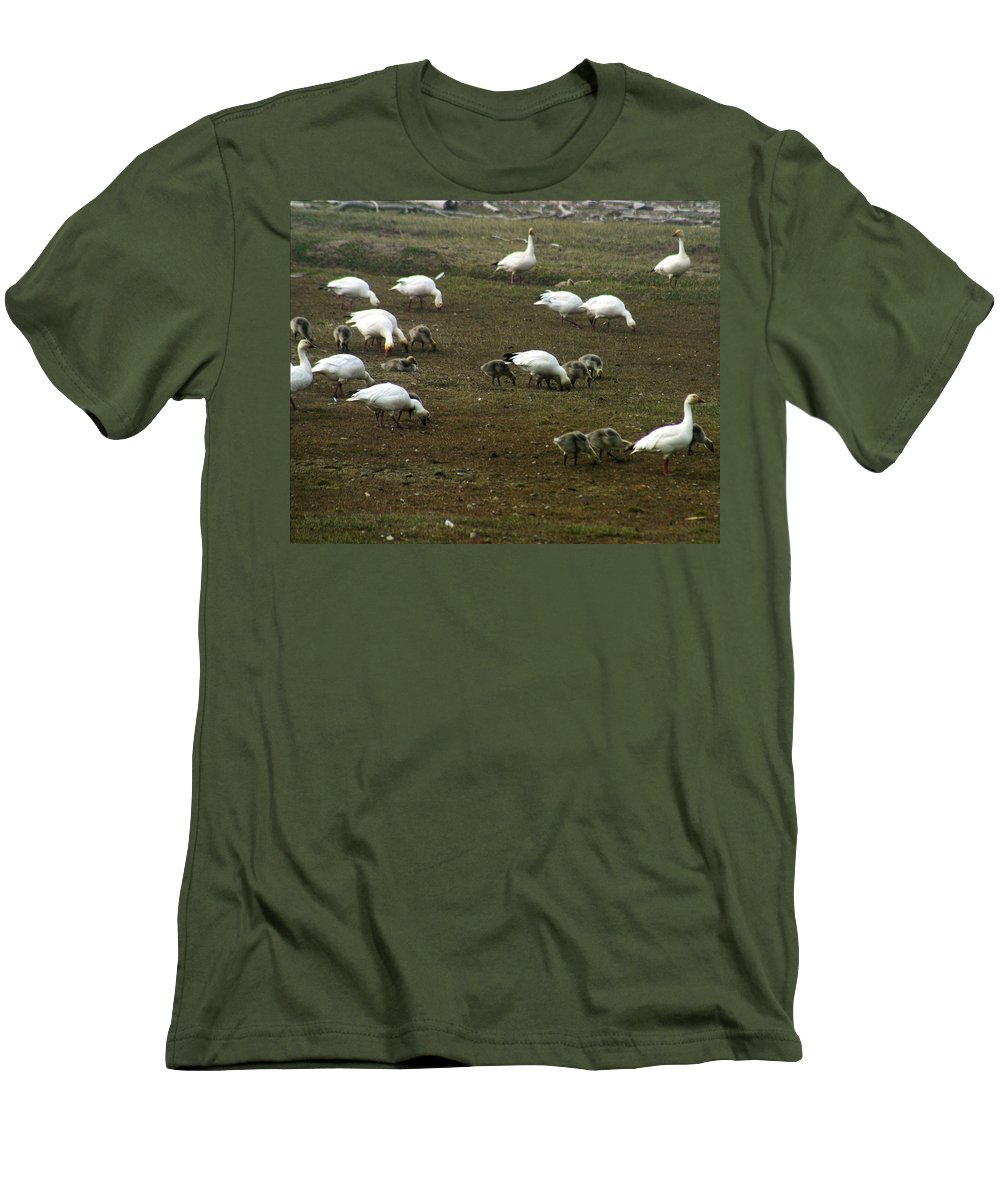 Snow Geese Men's T-Shirt (Athletic Fit) featuring the photograph Snow Geese by Anthony Jones
