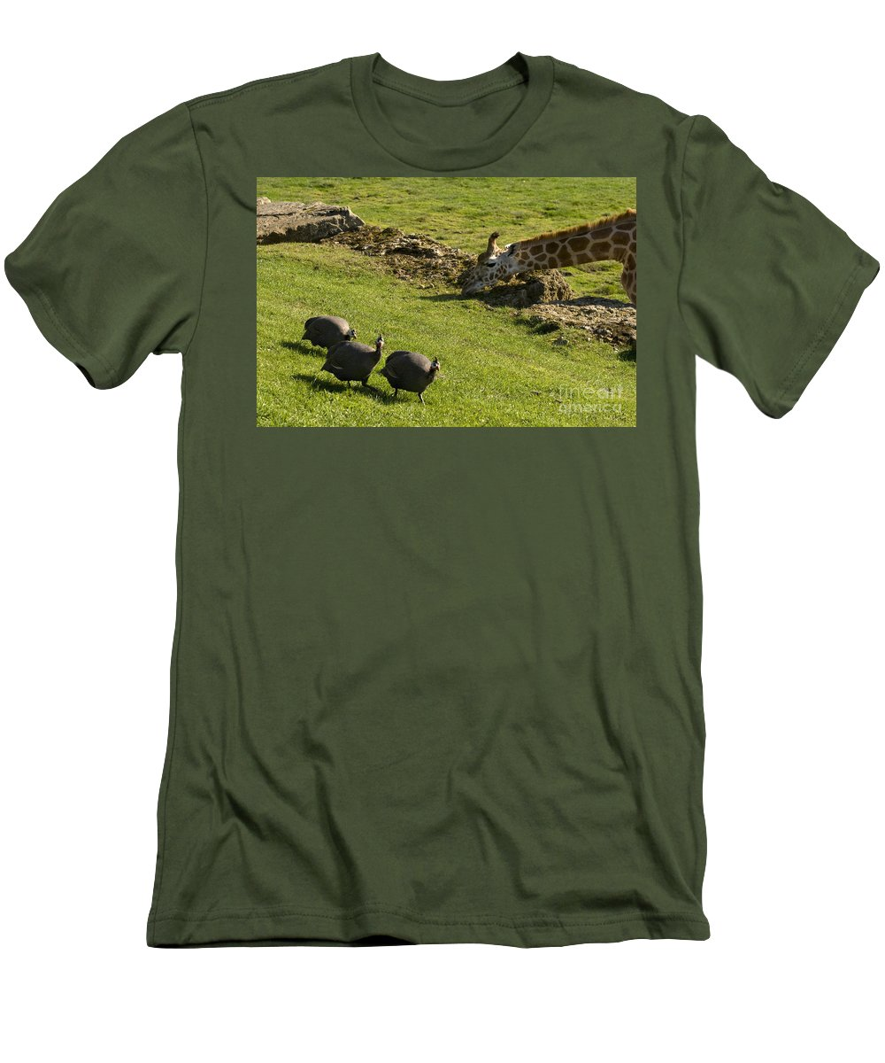 Helmeted Guineafowl Men's T-Shirt (Athletic Fit) featuring the photograph the Safari park by Angel Tarantella