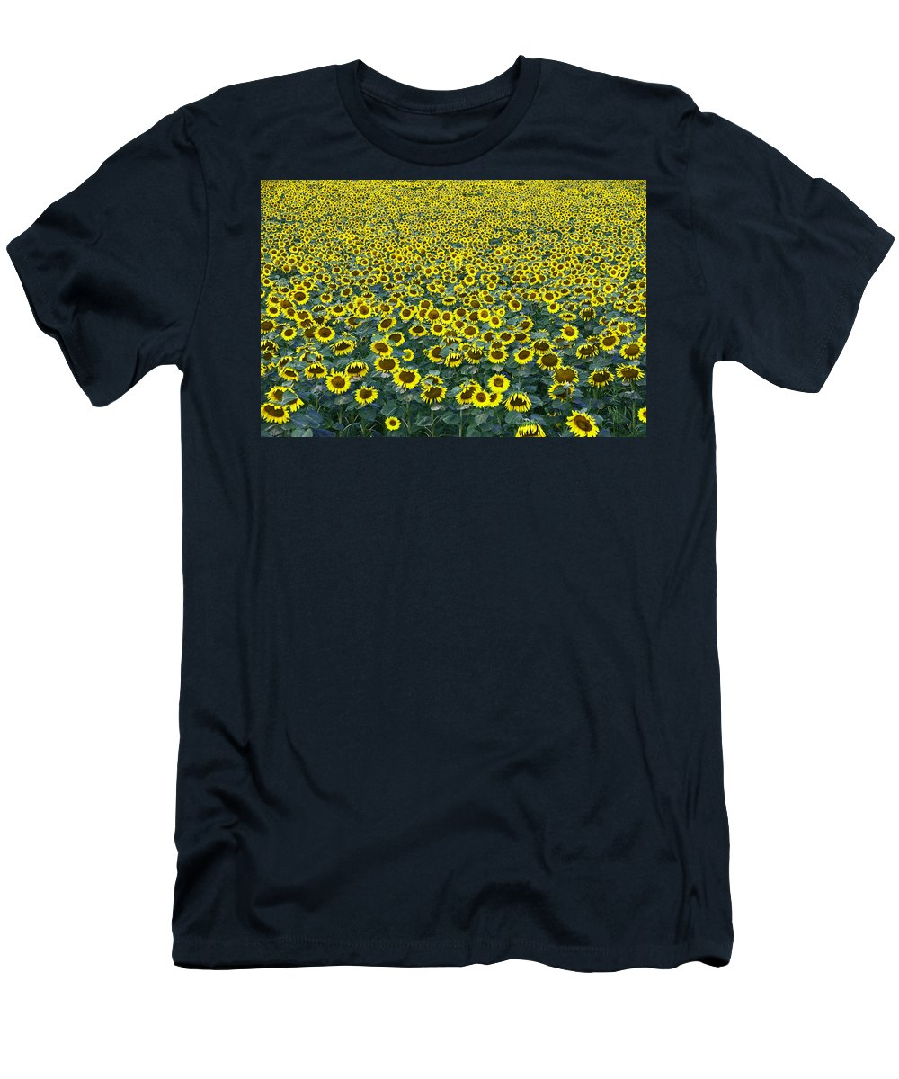 Yellow Men's T-Shirt (Athletic Fit) featuring the photograph Sunflower Nirvana 13 by Allen Beatty