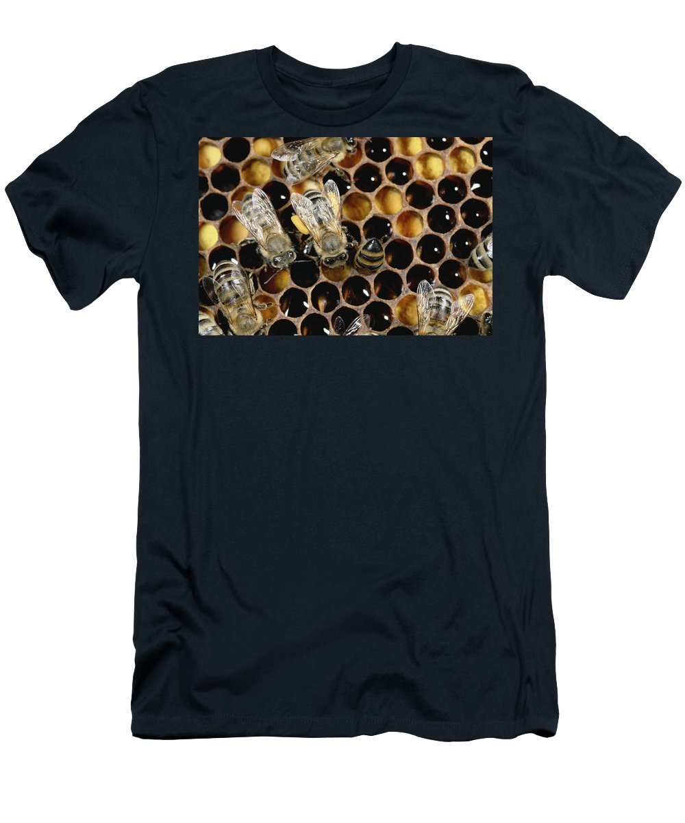 00193692 Men's T-Shirt (Athletic Fit) featuring the photograph Honey Bees On Honeycomb by Konrad Wothe