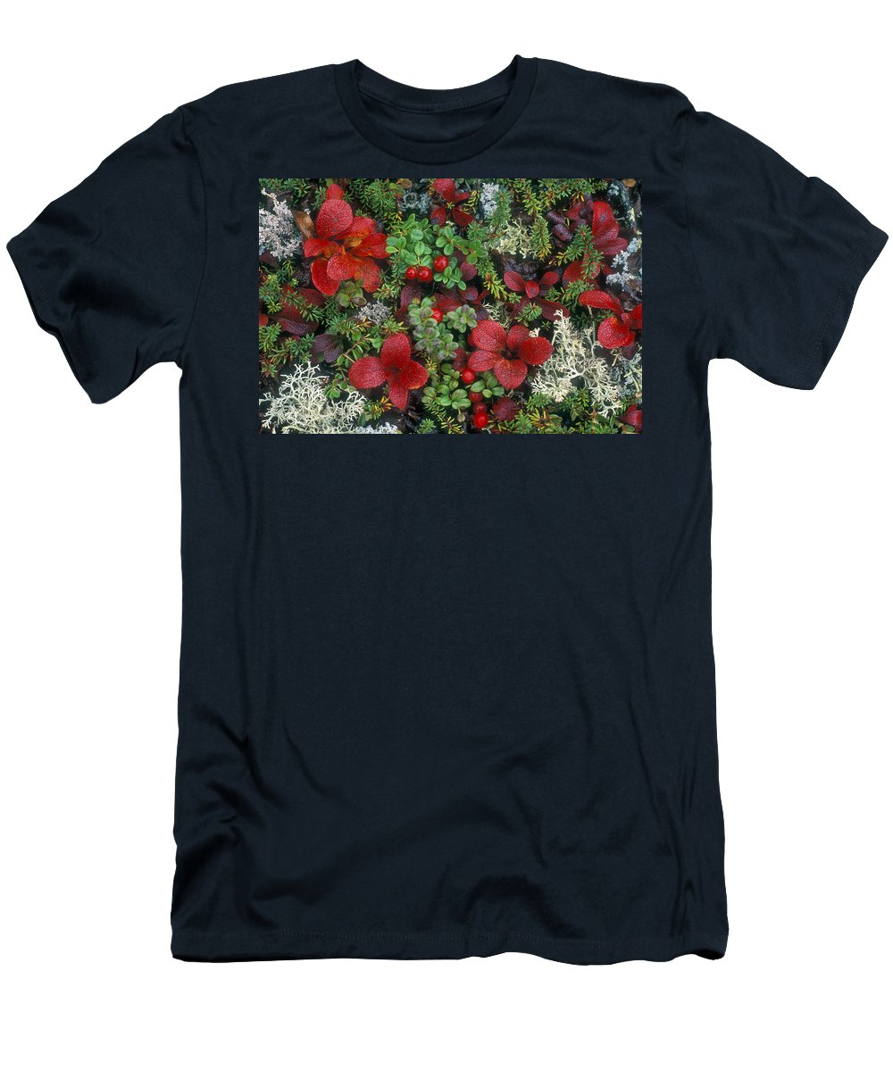 Cowberries Men's T-Shirt (Athletic Fit) featuring the photograph Alaskan Berries 1 by Arterra Picture Library