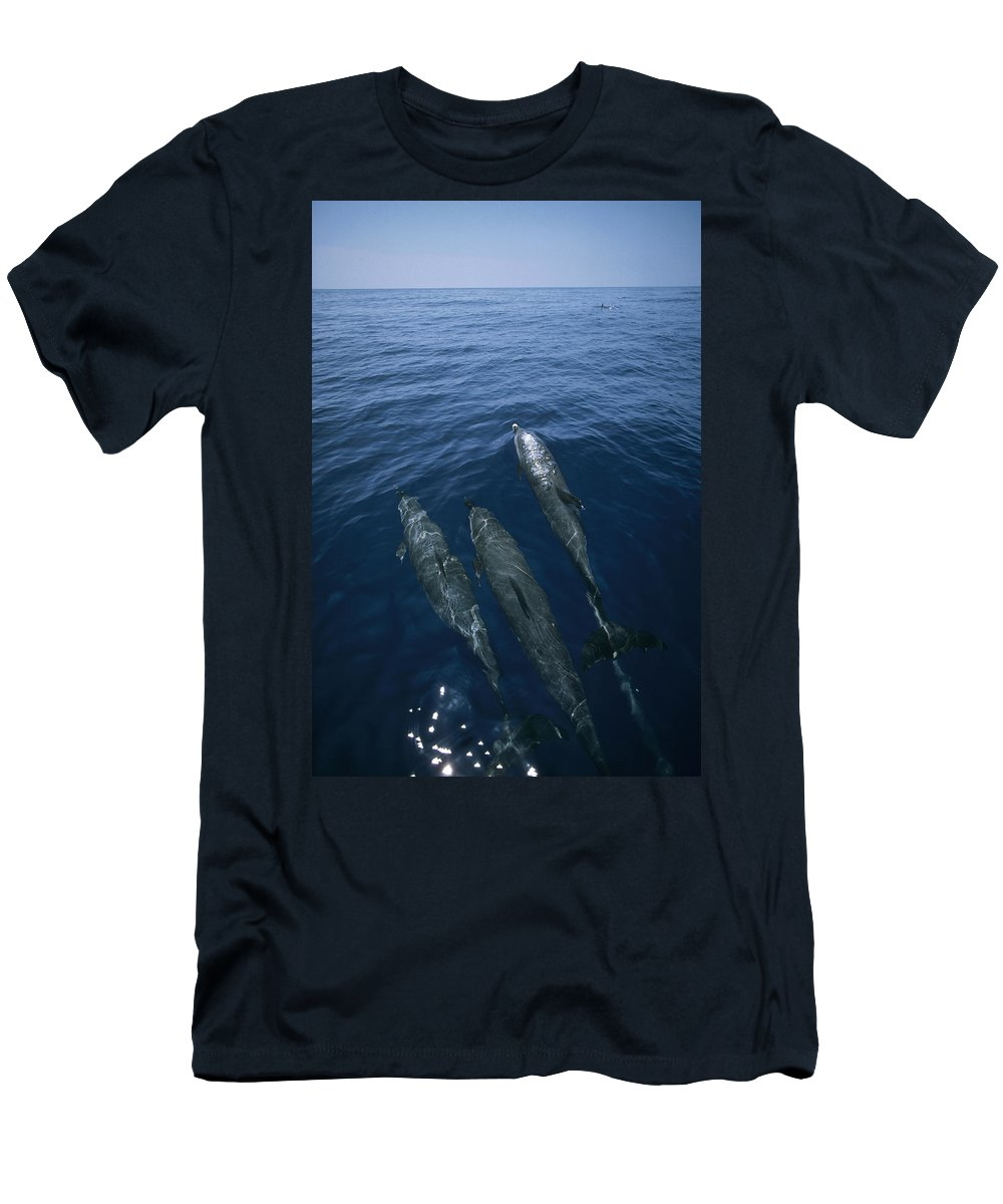 Feb0514 Men's T-Shirt (Athletic Fit) featuring the photograph Bottlenose Dolphins Surfacing Shark Bay by Flip Nicklin