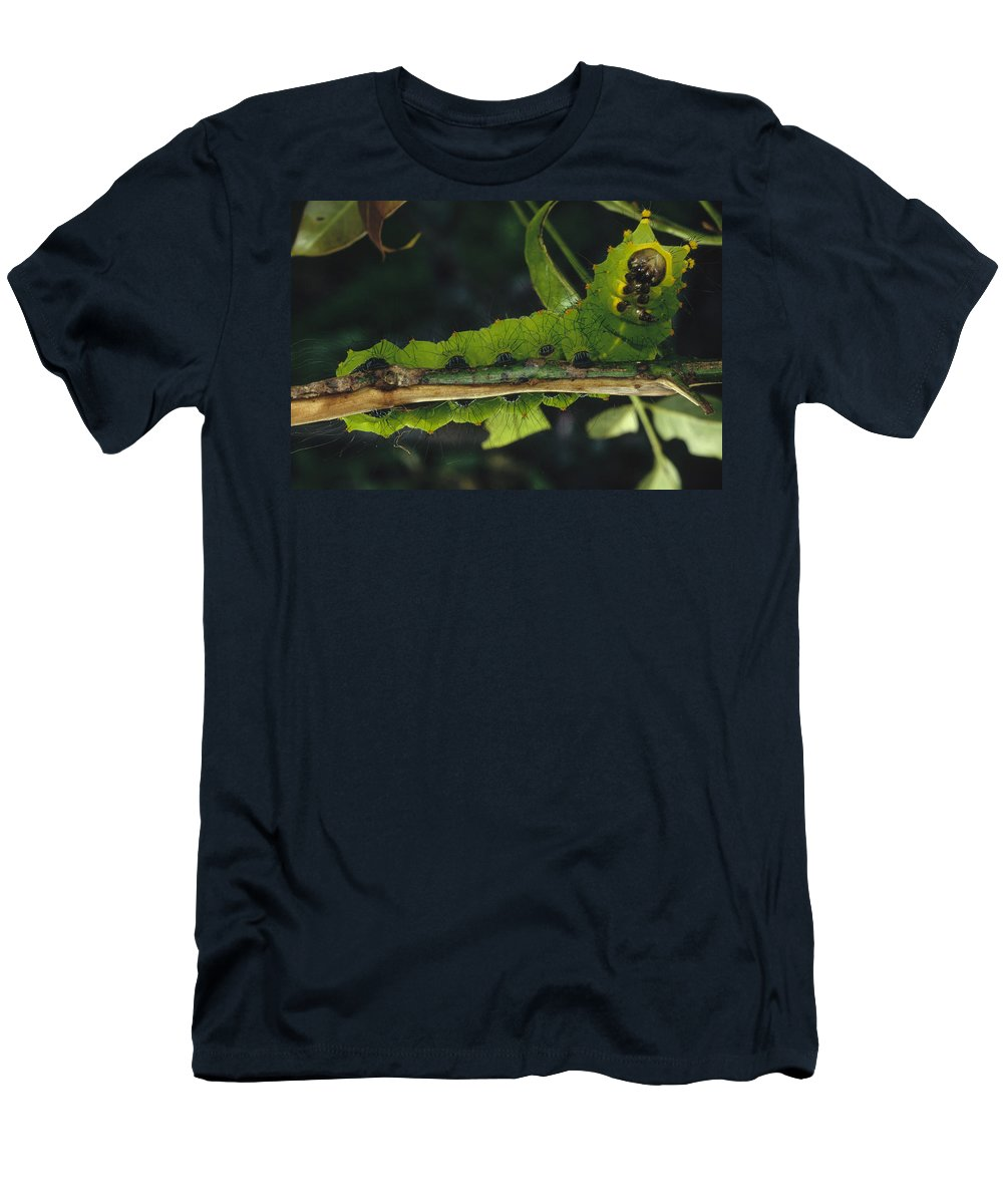Feb0514 Men's T-Shirt (Athletic Fit) featuring the photograph Caterpillar Tam Dao Np Vietnam by Mark Moffett