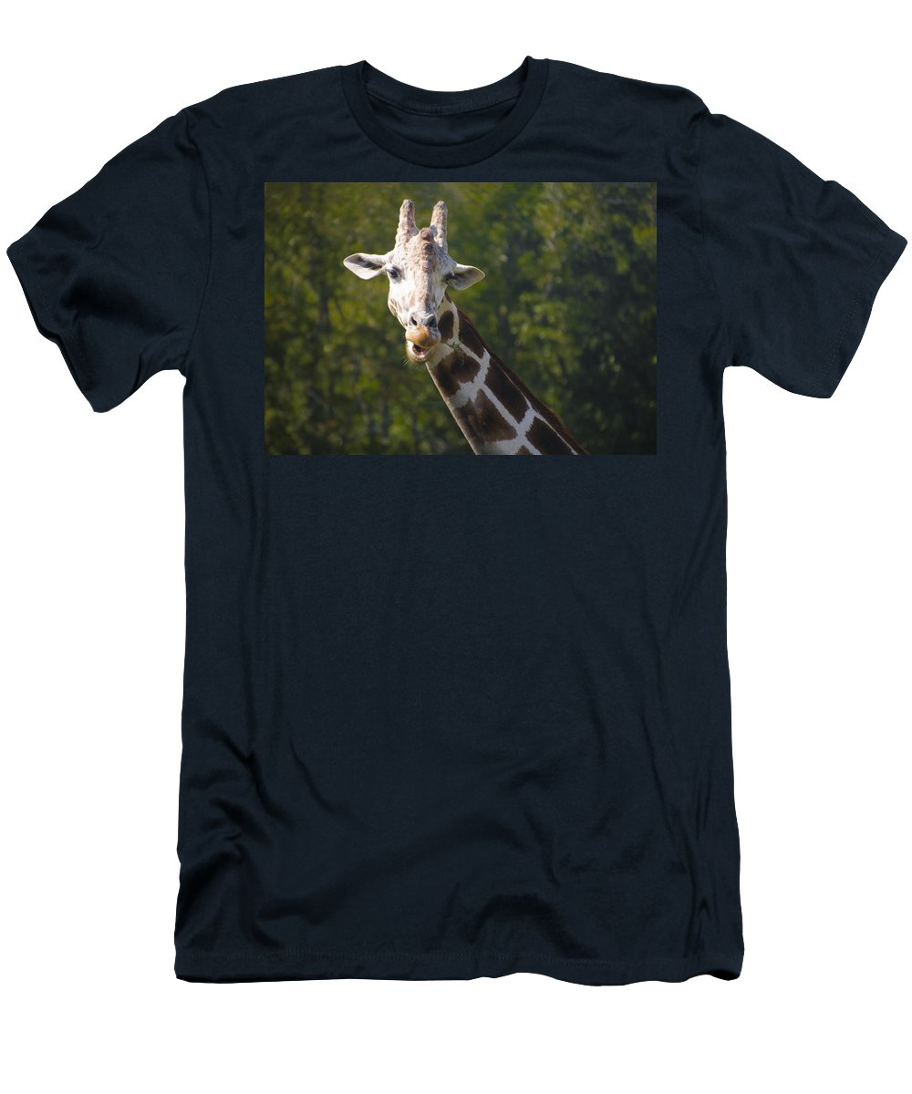 Giraffe Men's T-Shirt (Athletic Fit) featuring the photograph From The Top by Bill Cannon