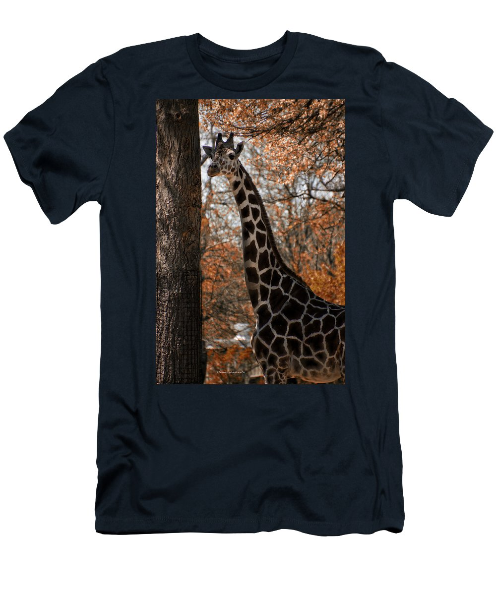 Giraffe Men's T-Shirt (Athletic Fit) featuring the photograph Giraffe Posing by Thomas Woolworth