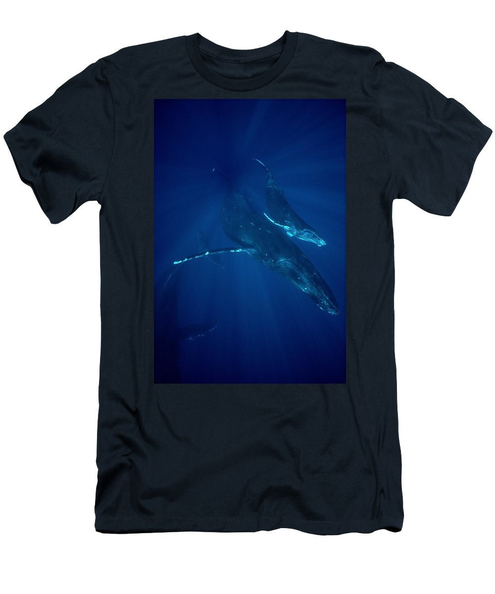 Feb0514 Men's T-Shirt (Athletic Fit) featuring the photograph Humpback Whale Mother And Calf Hawaii by Flip Nicklin