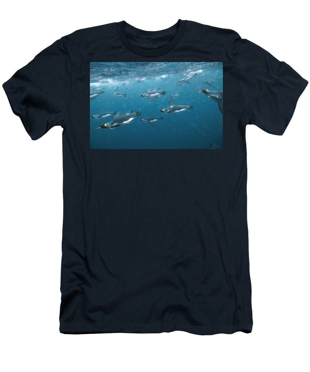Feb0514 Men's T-Shirt (Athletic Fit) featuring the photograph King Penguins Swimming Underwater by Tui De Roy