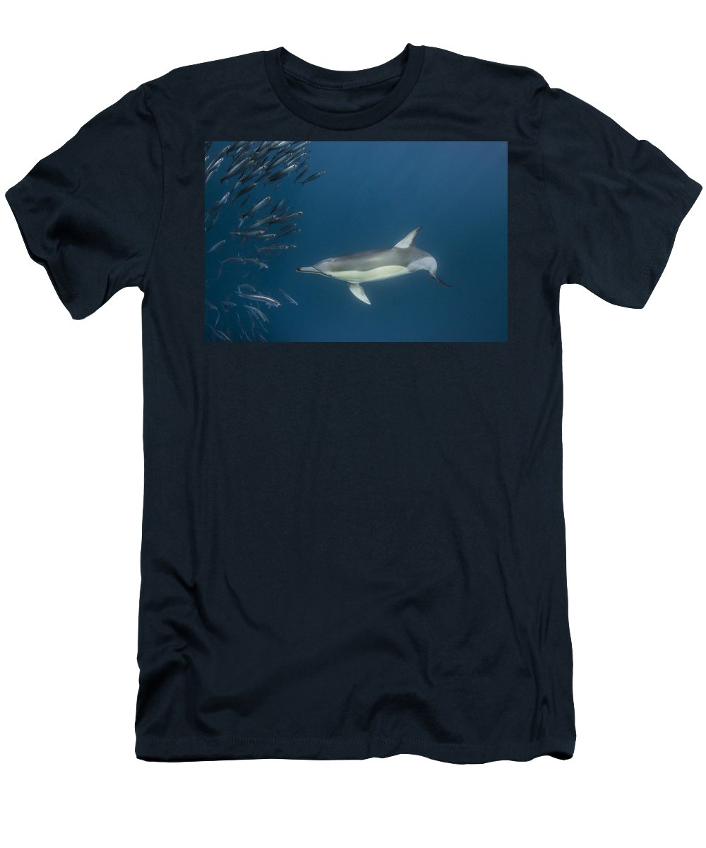 Feb0514 Men's T-Shirt (Athletic Fit) featuring the photograph Long-beaked Common Dolphin Hunting by Pete Oxford