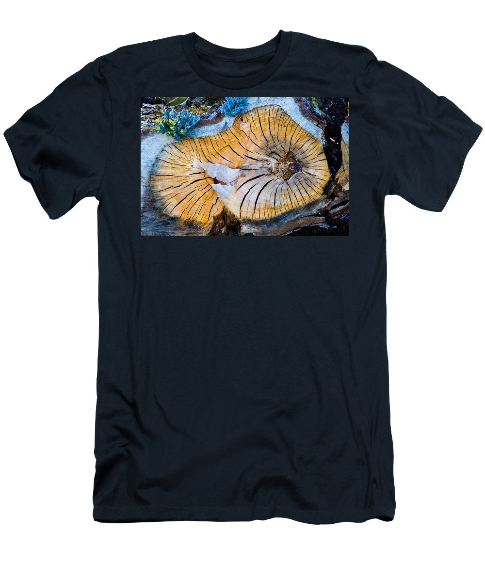 Tree Men's T-Shirt (Athletic Fit) featuring the photograph Nature's Calendar by Ernesto Santos