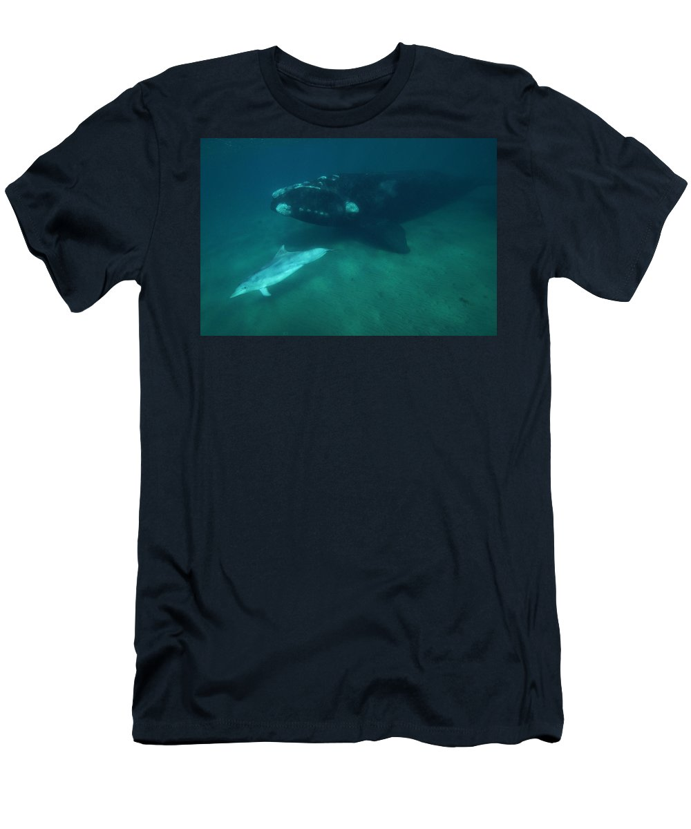 Feb0514 Men's T-Shirt (Athletic Fit) featuring the photograph Southern Right Whale And Bottlenose by Hiroya Minakuchi