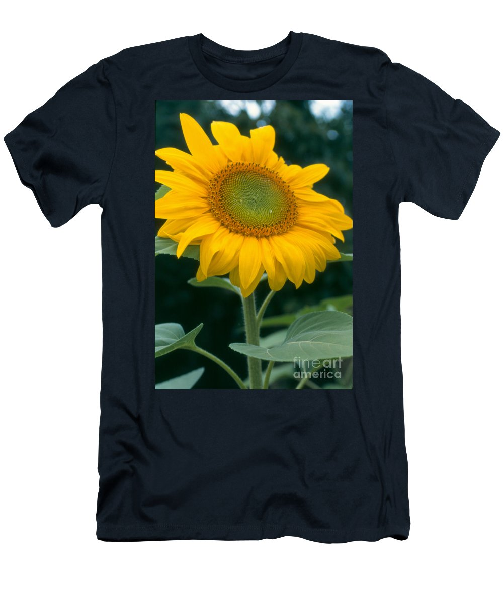 Flower Men's T-Shirt (Athletic Fit) featuring the photograph Sunflower In Seattle by Heather Kirk