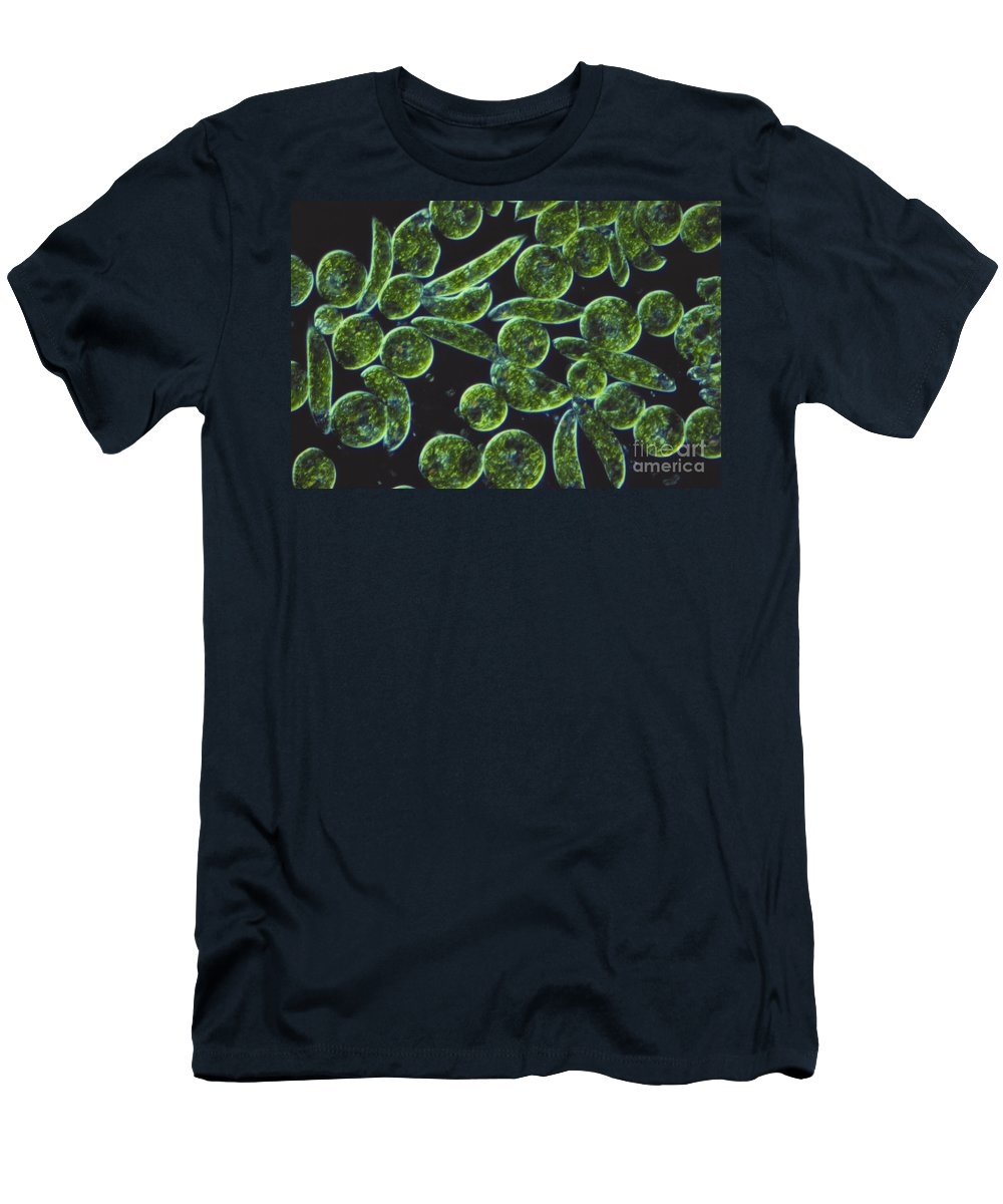 Science Men's T-Shirt (Athletic Fit) featuring the photograph Euglena, Lm by M. I. Walker