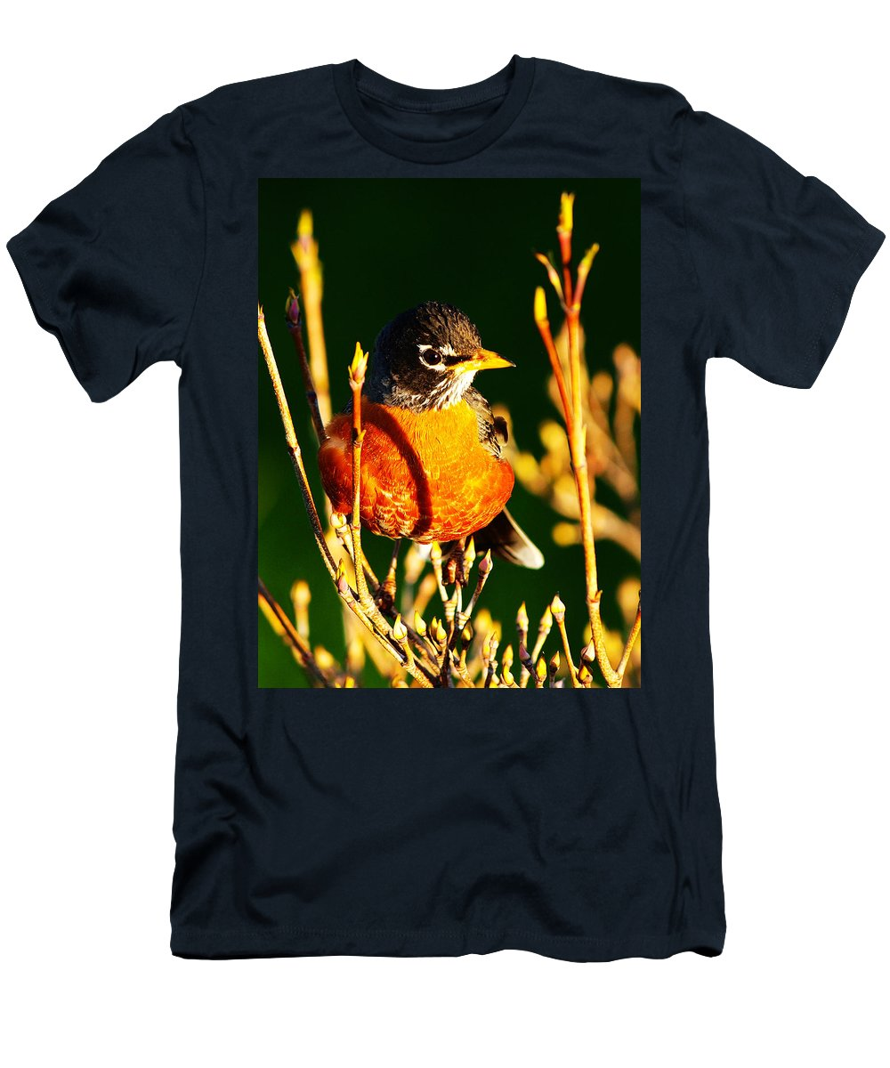 American Beak Bill Bird Birder Birding Birds Birdwatch Birdwatcher Birdwatching Close Closeup Eye Feather Feathering Feathers Flight Grass Hunter Hunting Lawn Migrate Migration Migratory Redbreast Robin Robins Summer Tail Thrush Thrushes Tree Wing Men's T-Shirt (Athletic Fit) featuring the photograph American Robin by Paul Ge