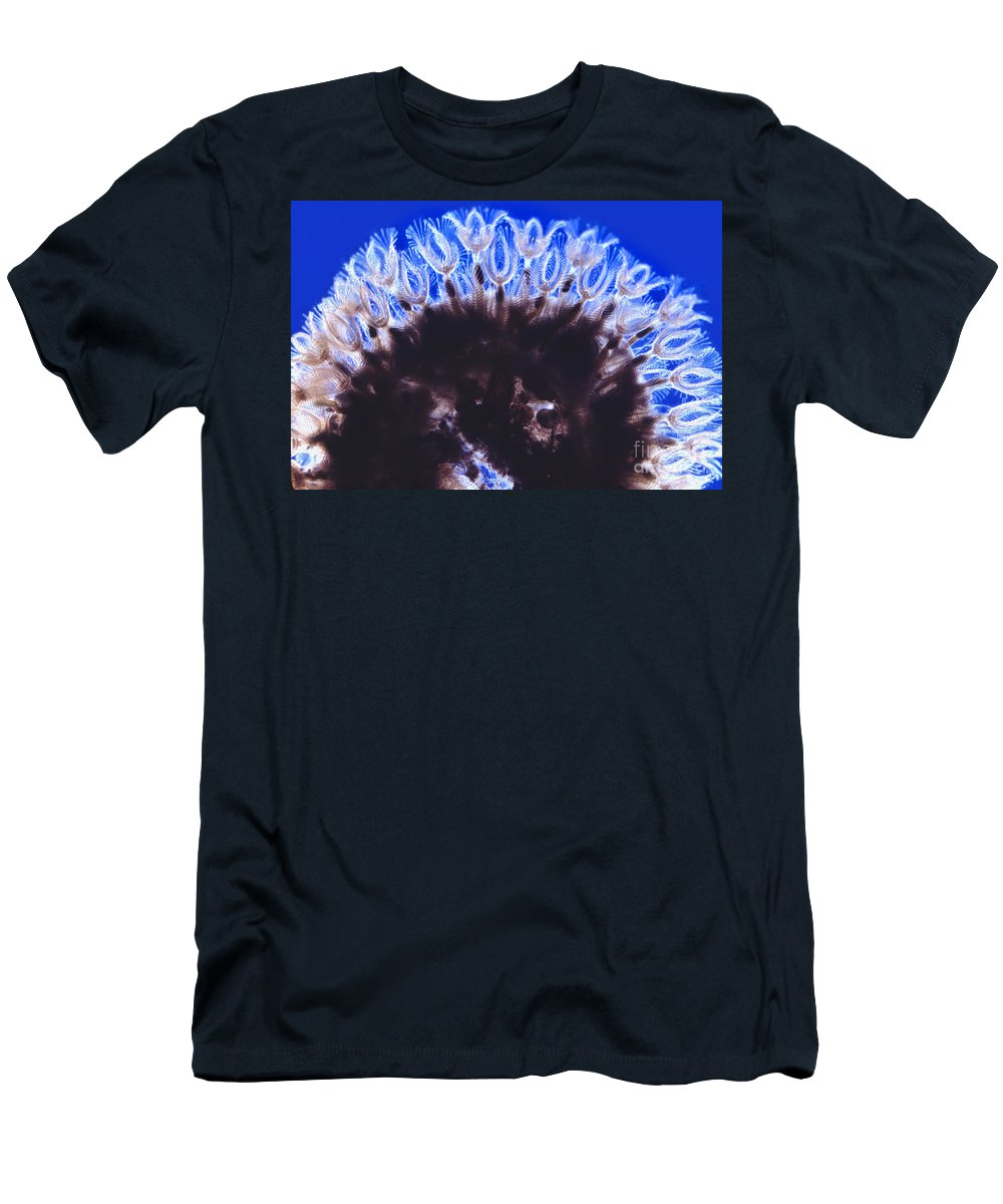 Light Microscopy Men's T-Shirt (Athletic Fit) featuring the photograph Asplanchna And Volvox by M. I. Walker